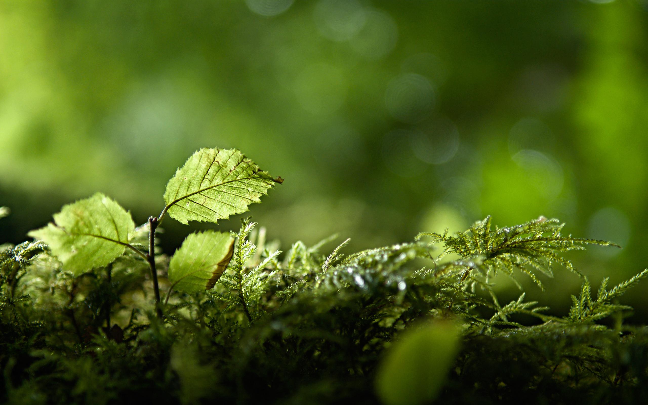 лес зелень ветви  № 2801157  скачать
