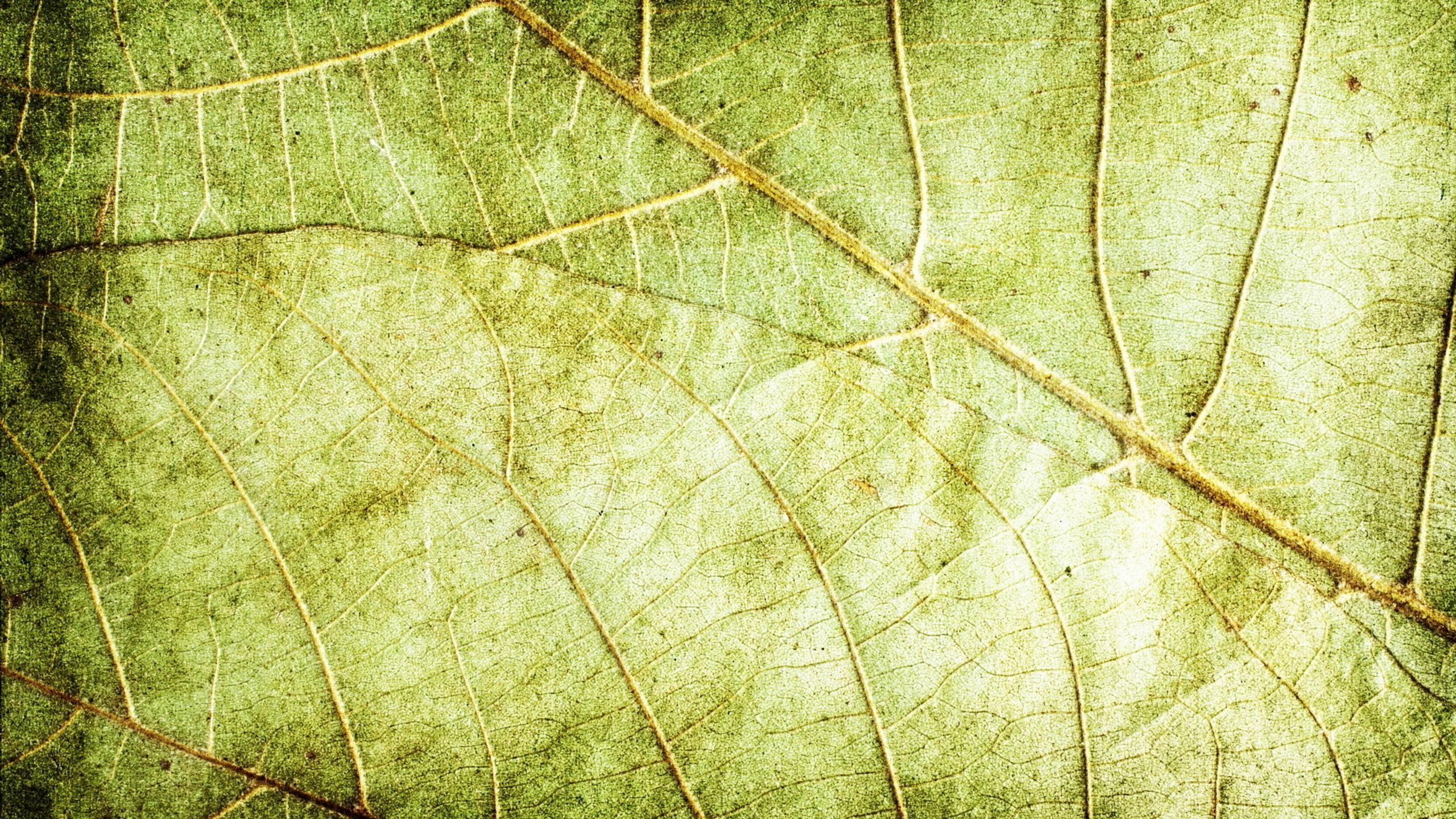 графика текстуры листья без смс