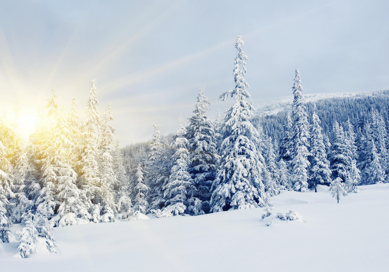 снег ели зима  № 3180830 загрузить