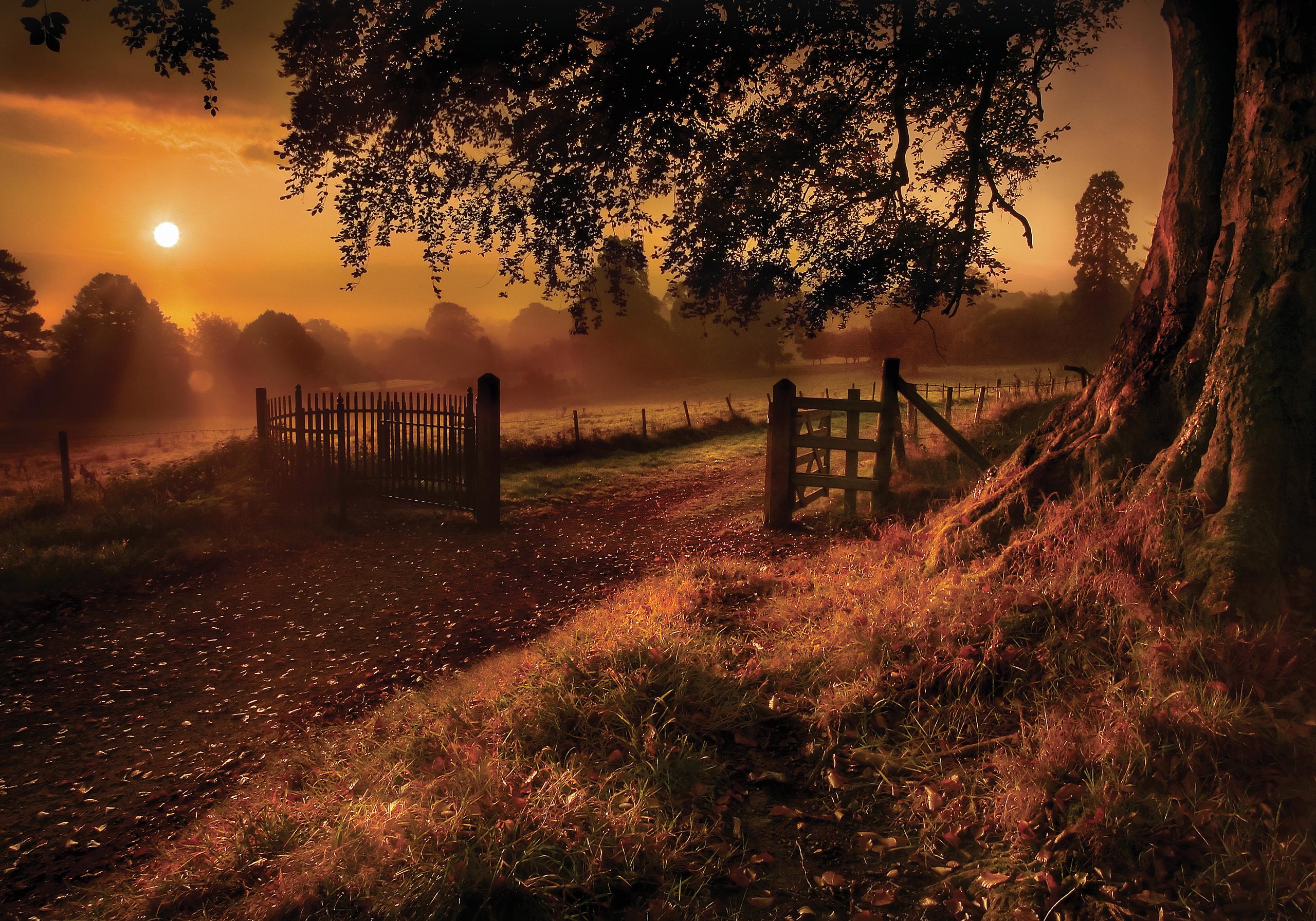 Восход солнца на окраине леса  № 1409466 загрузить