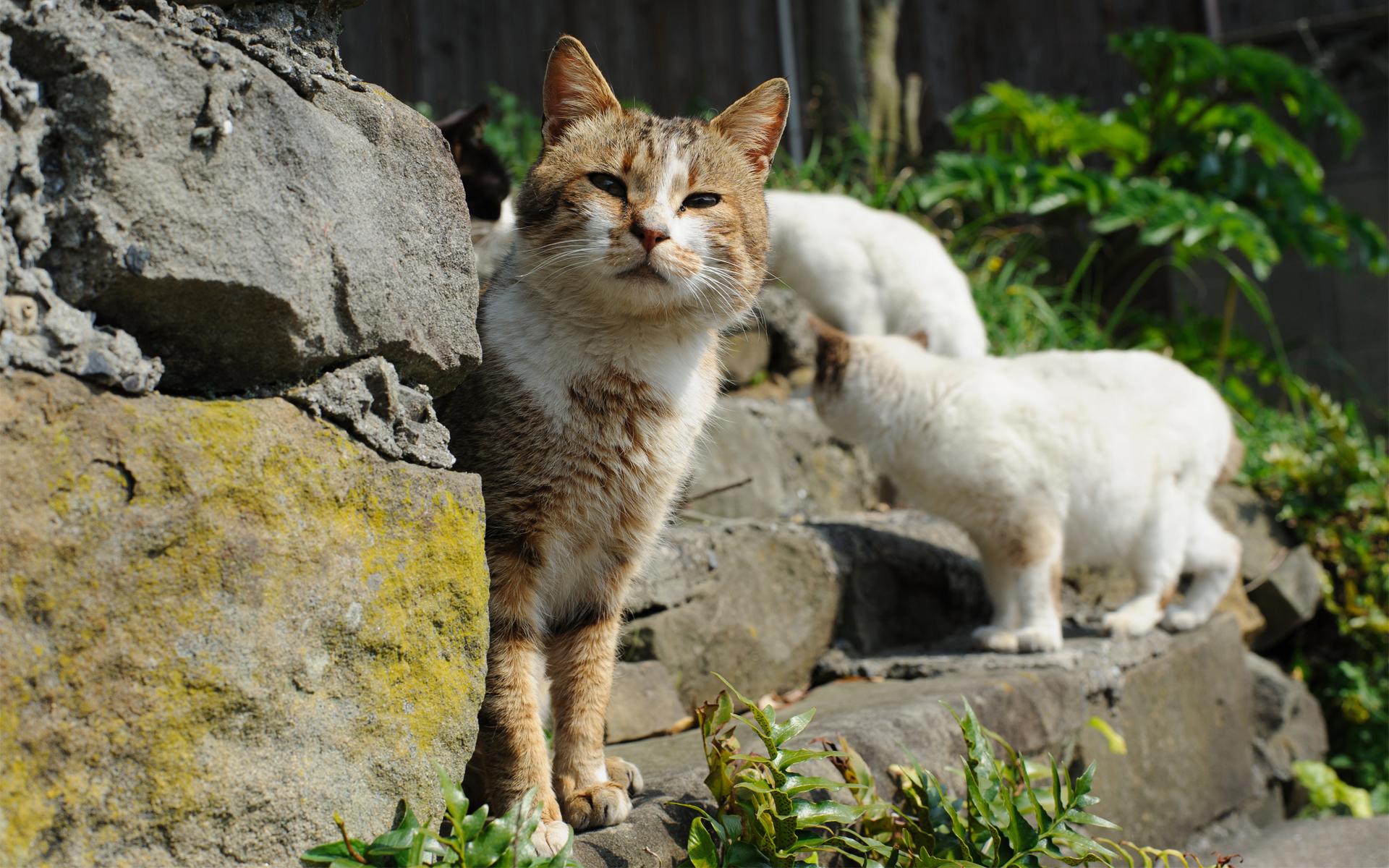 Кот на камушках  № 530436 без смс