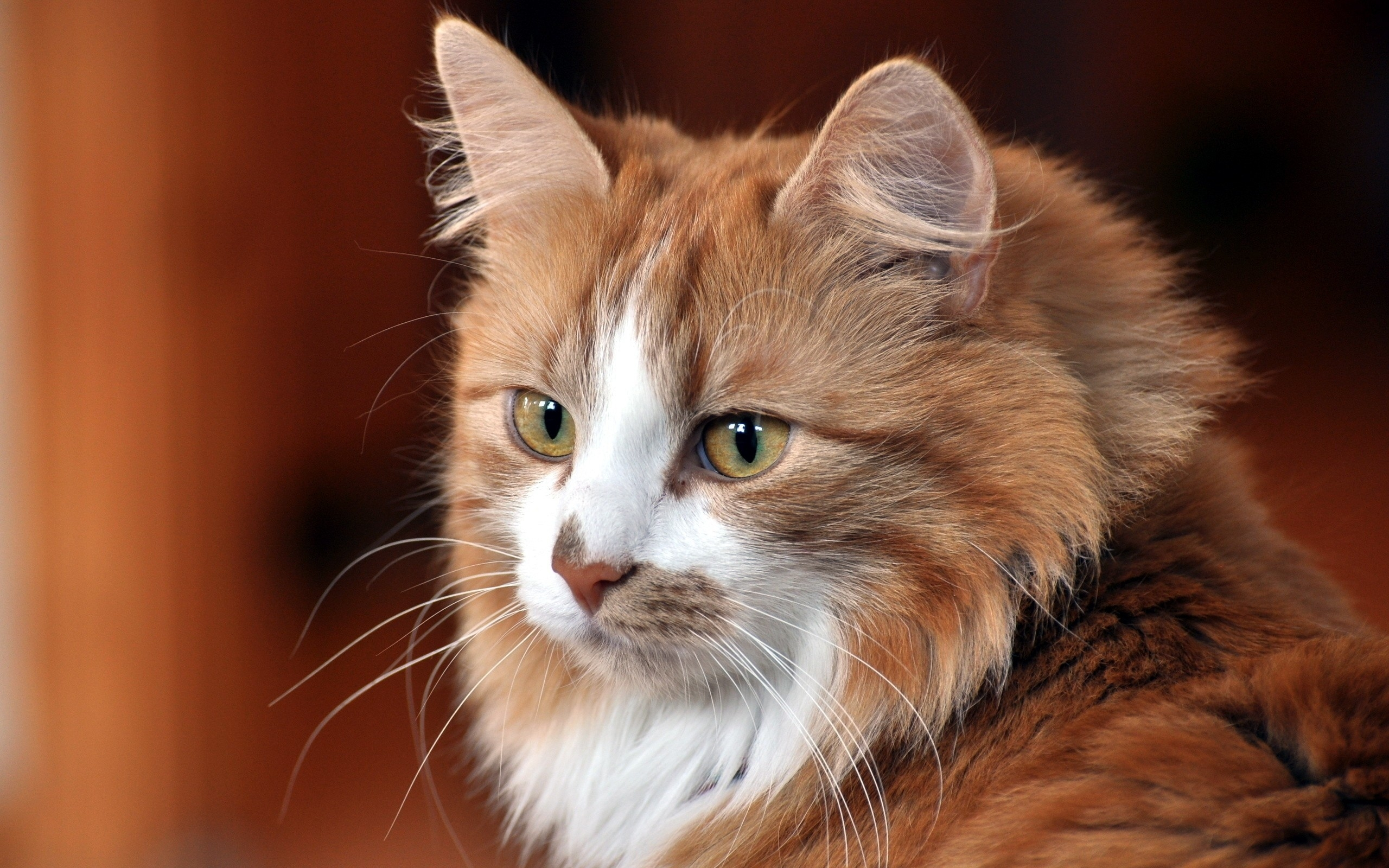 Картинка про кошек