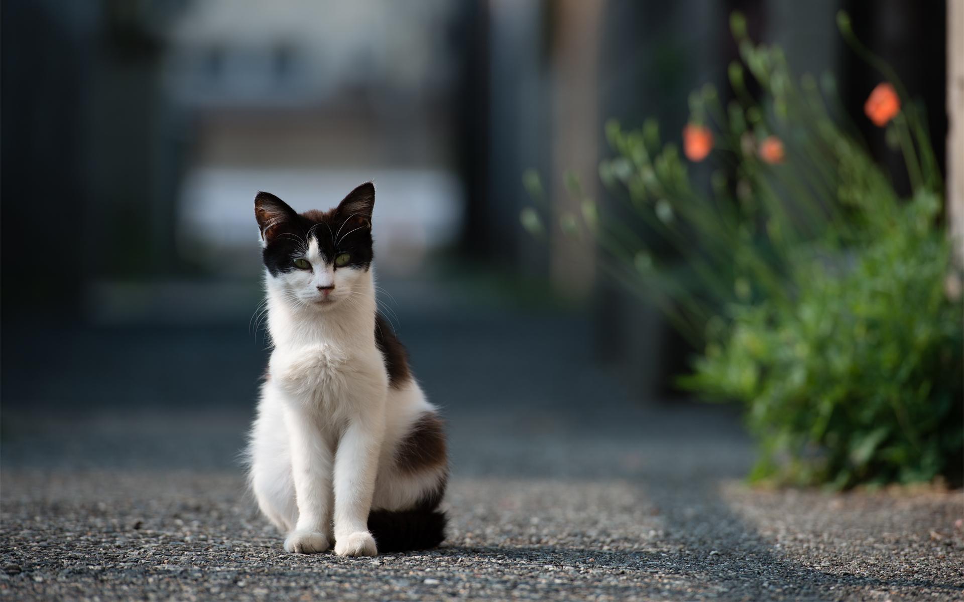 Два рыжих кота на дороге без смс