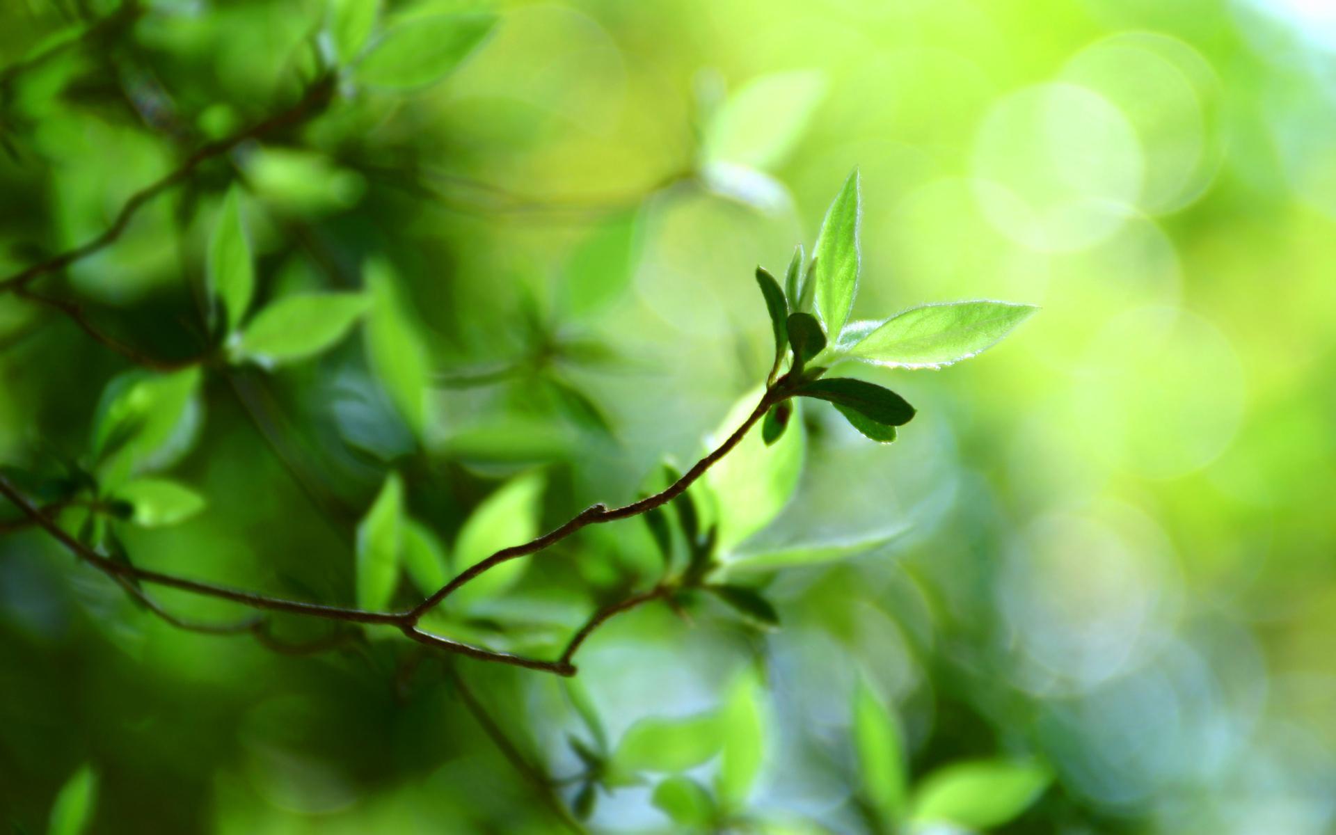 природа листья весна  № 3899952 загрузить