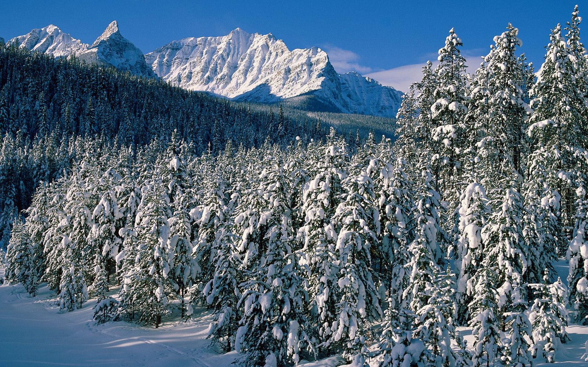 природа деревья скалы горы зима снег бесплатно