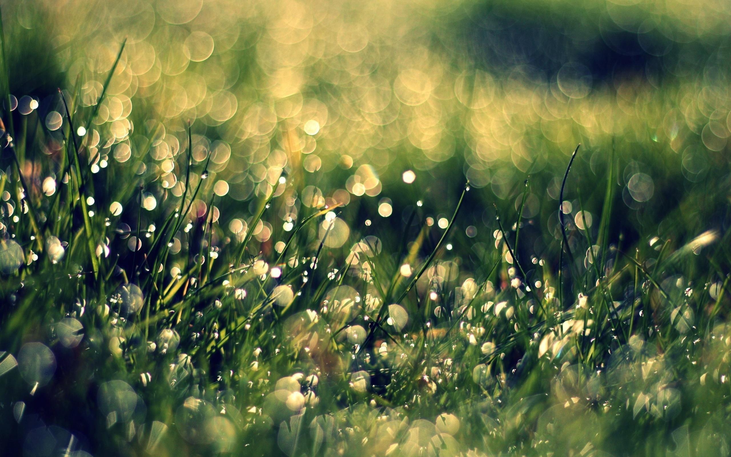 Трава макро съемка  № 3147977 бесплатно
