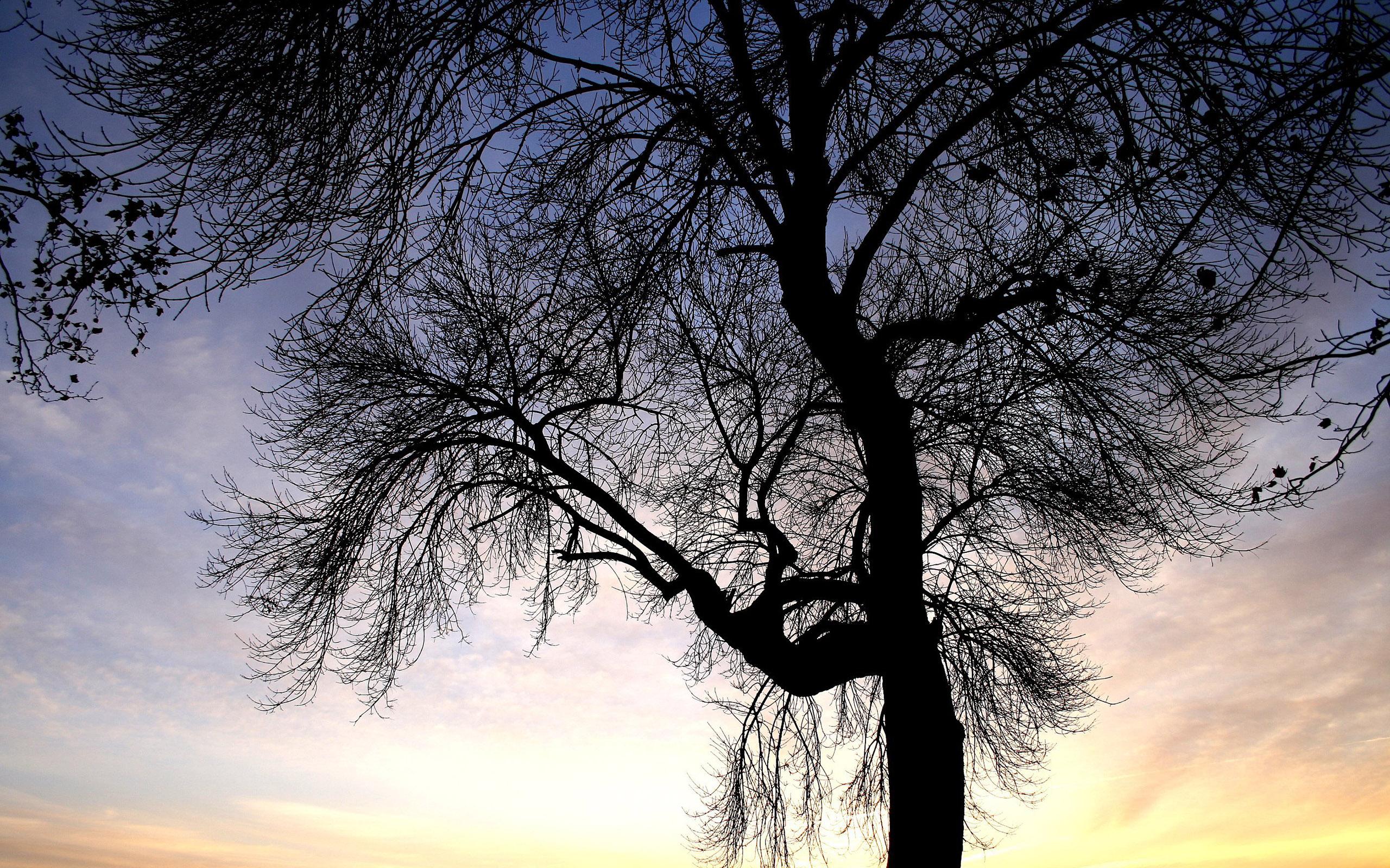 природа деревья ветки загрузить