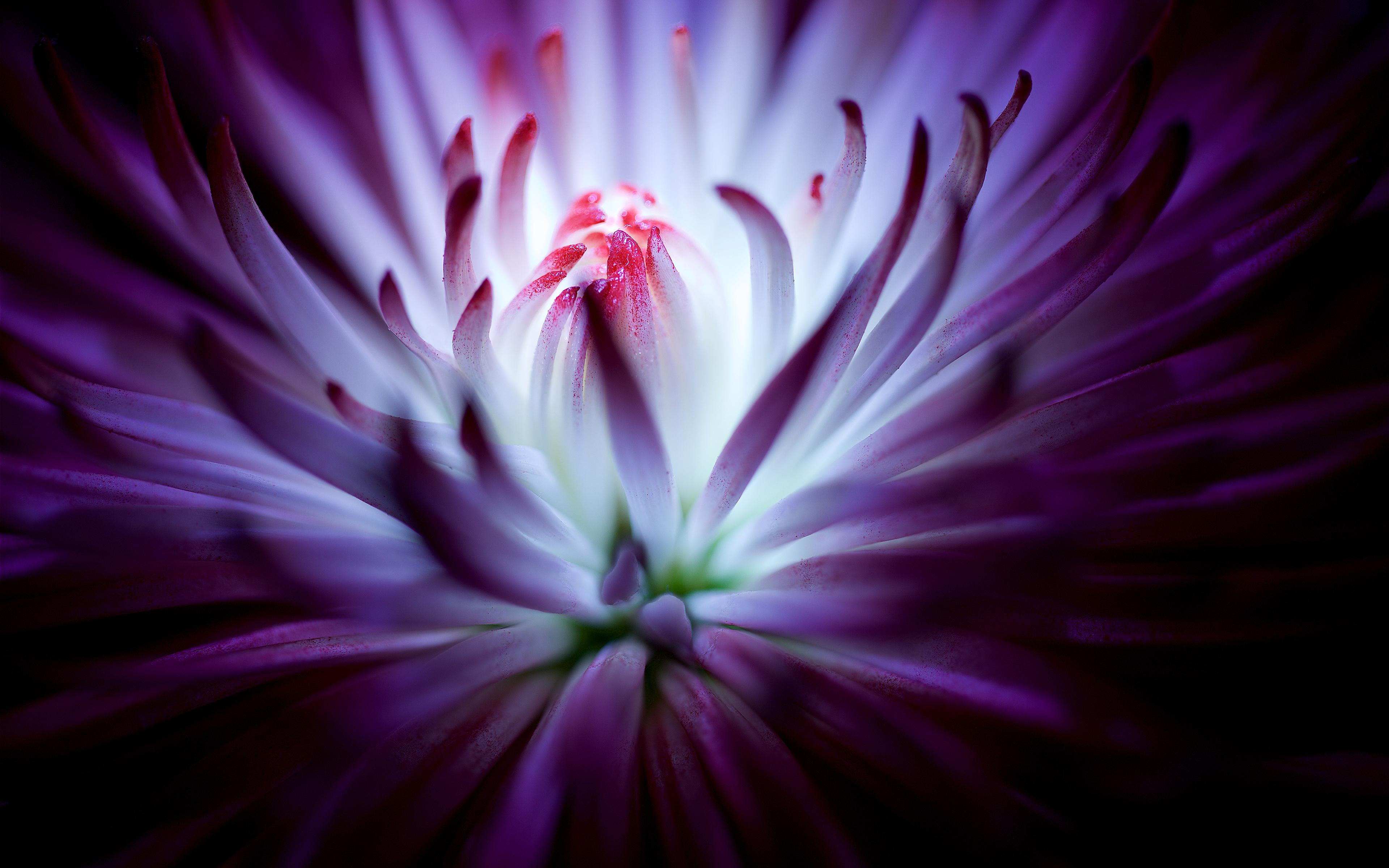 цветок фиолетовый  № 814199 без смс