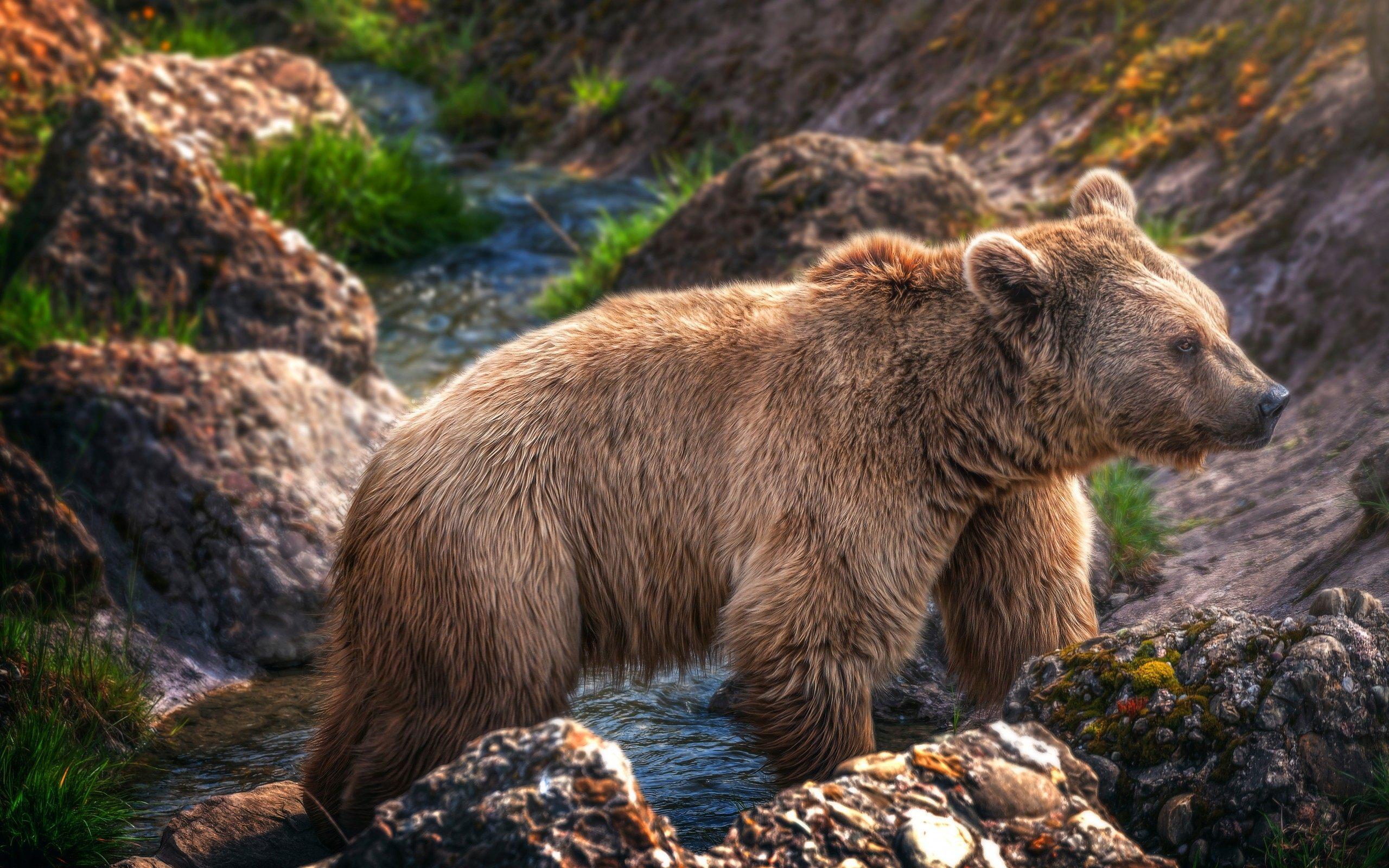 Открытка бурый медведь