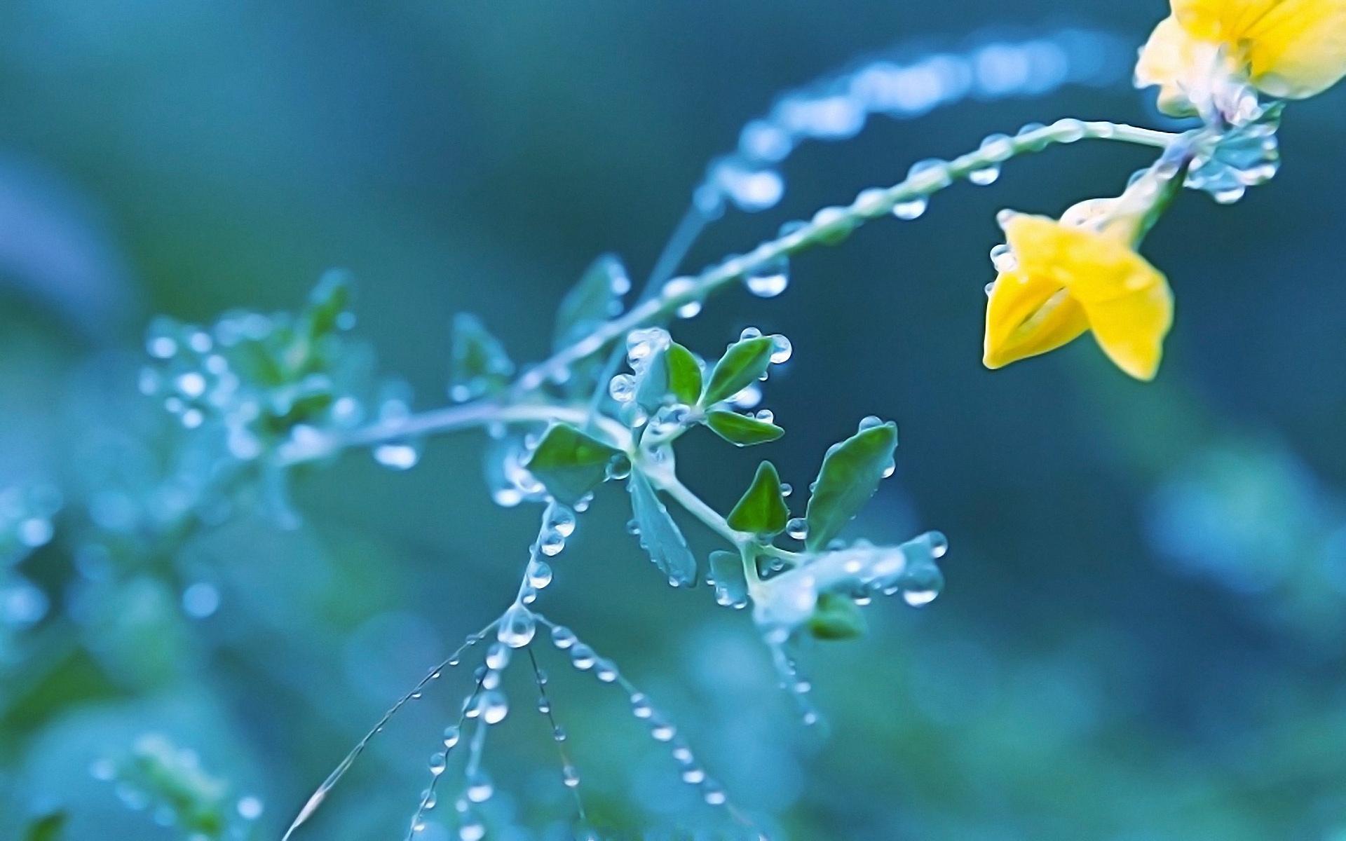 природа цветы роса скачать