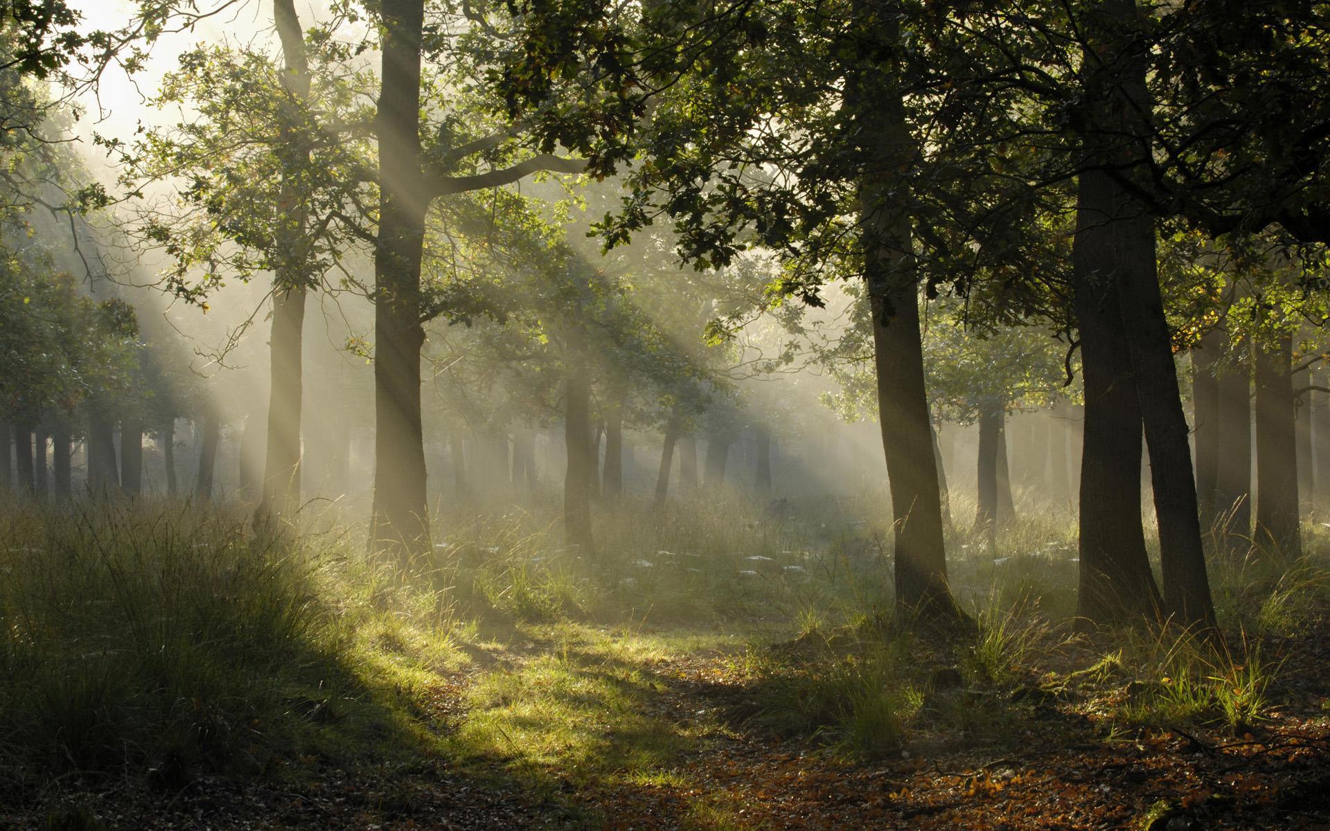 Лучи лес деревья  № 3847436 бесплатно