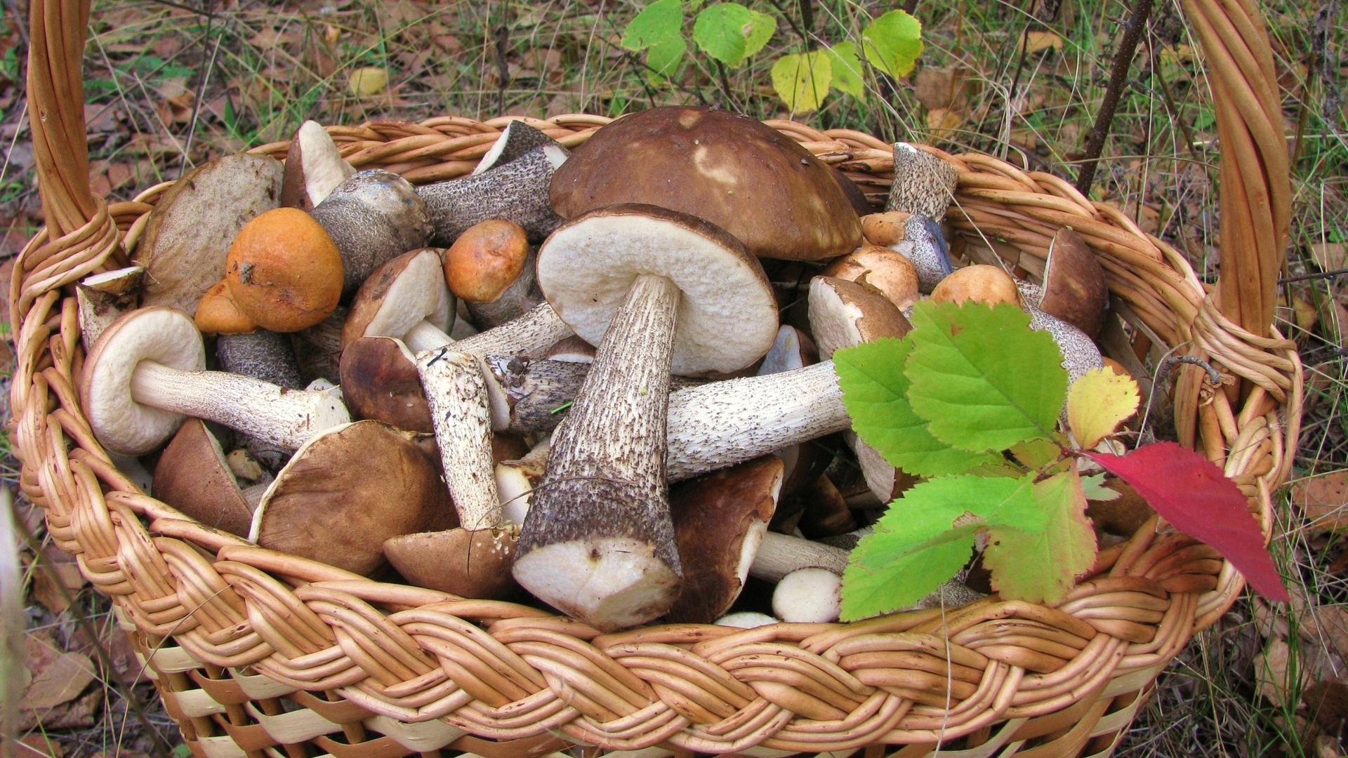 Картинка корзина с грибами на рабочий стол