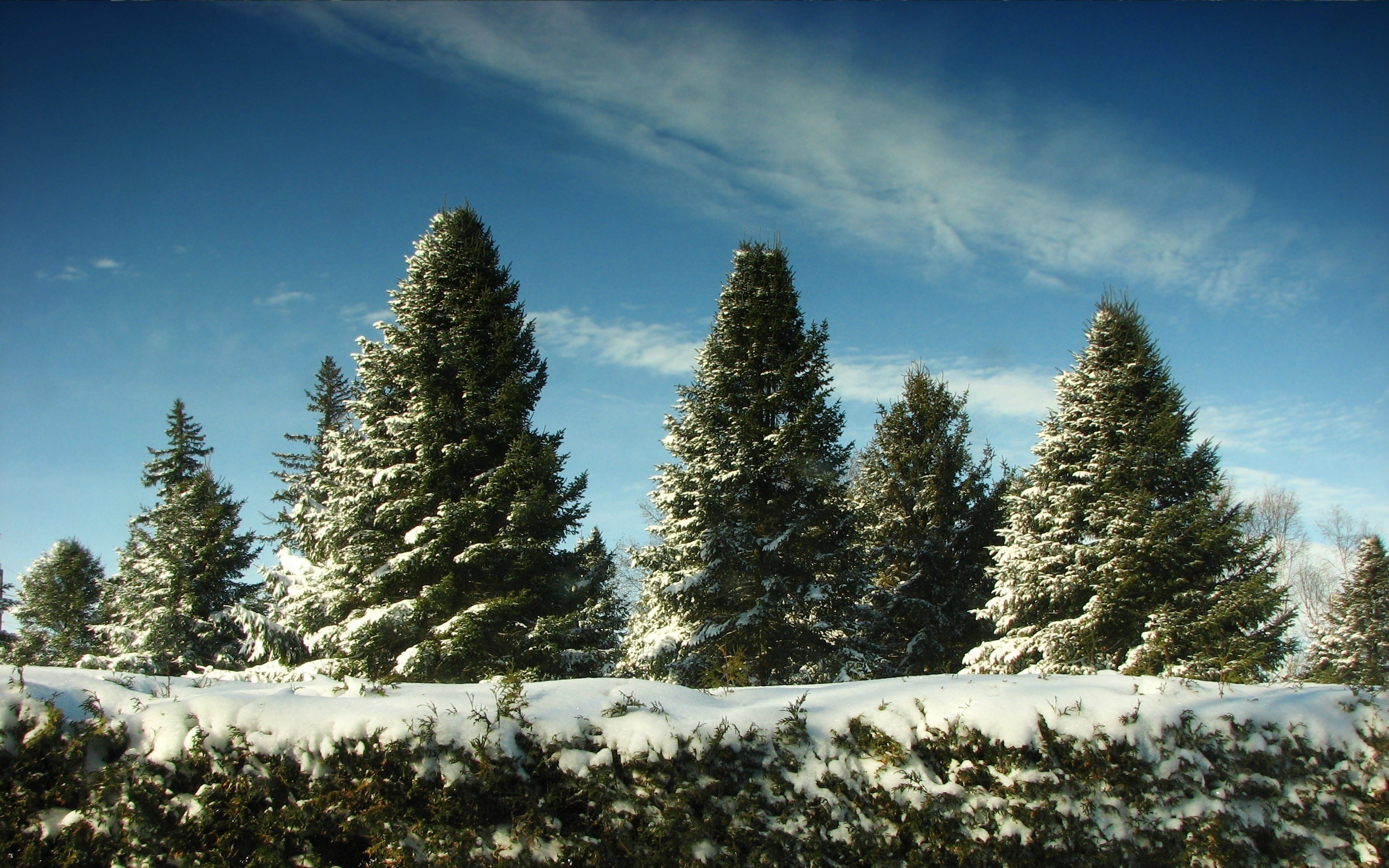 Зима деревья лес ели загрузить