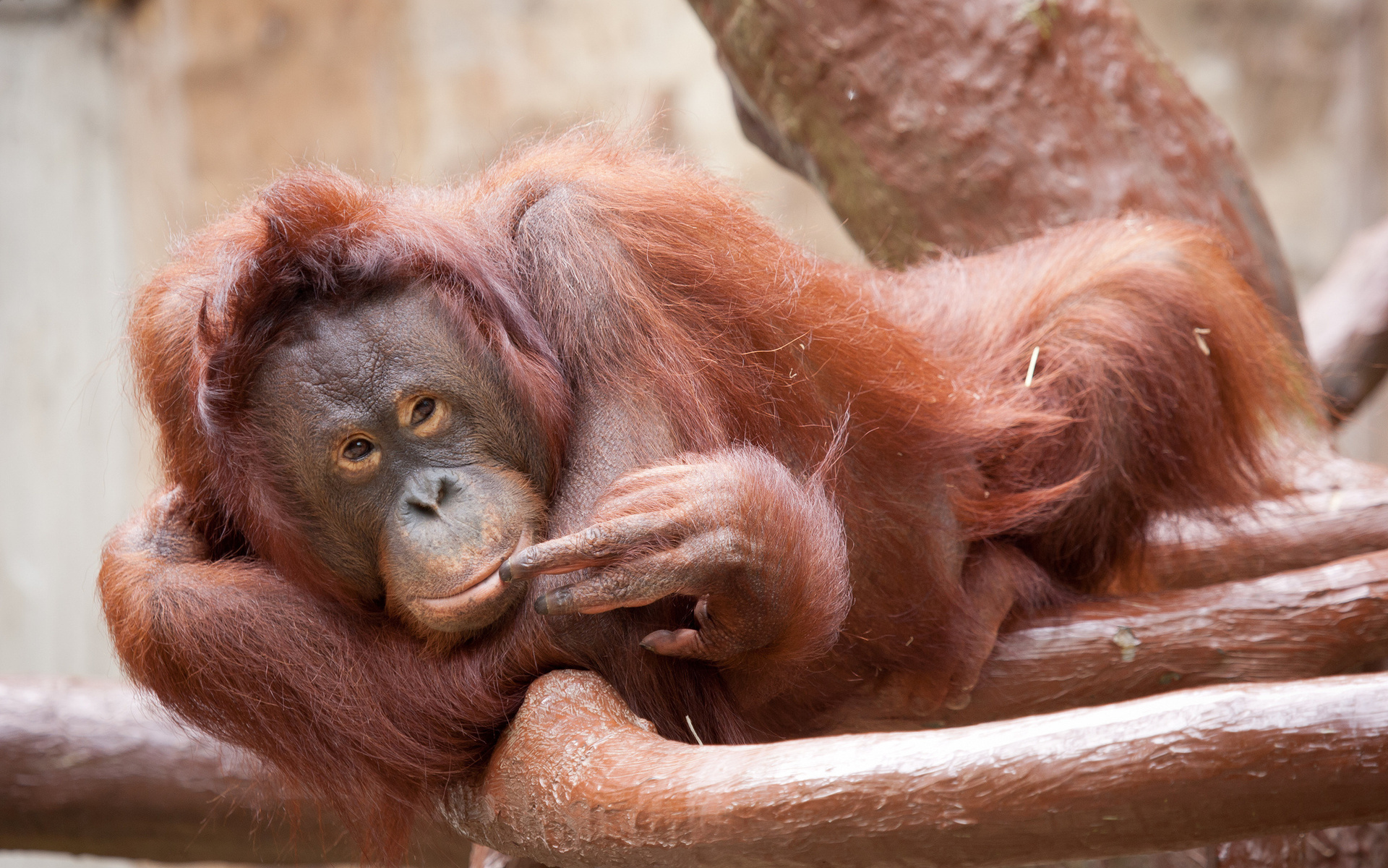 Прикольные картинки животных обезьяны