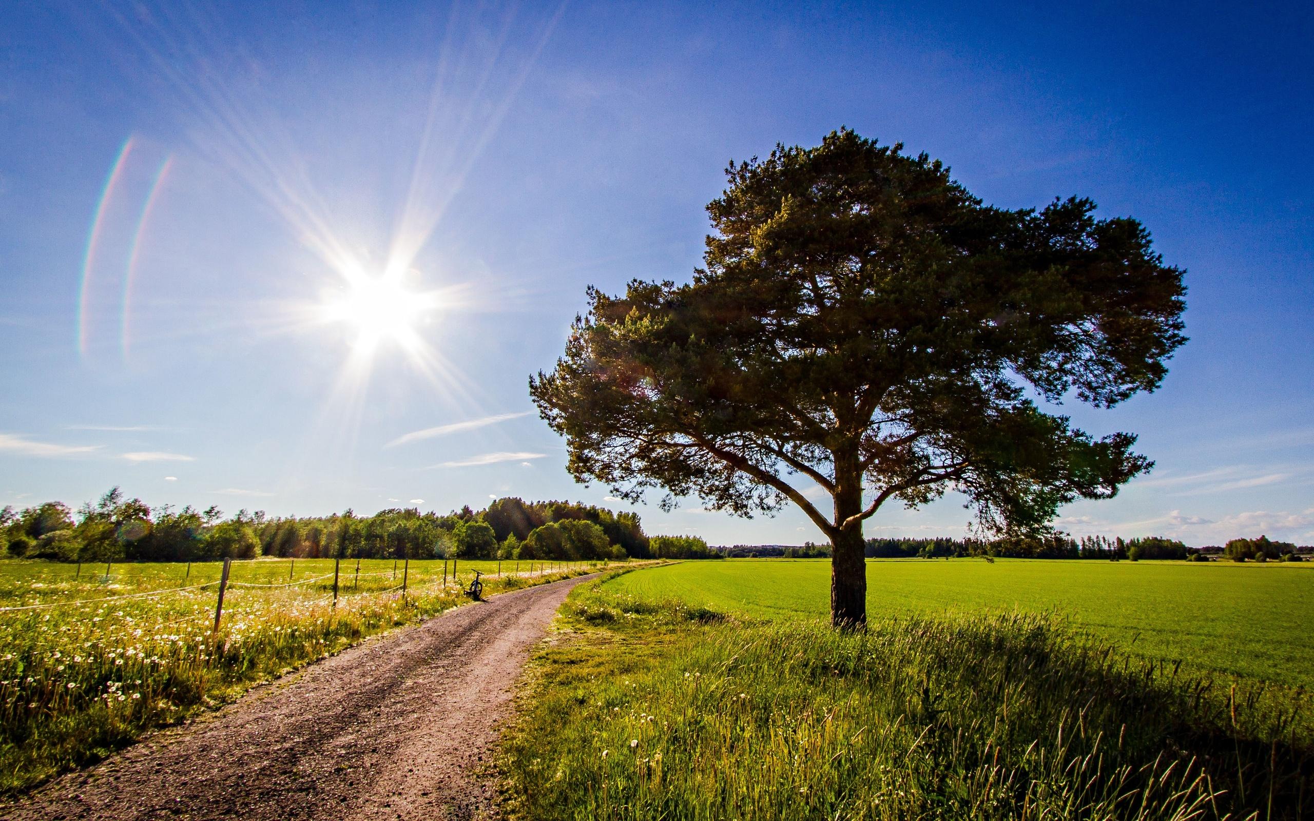 дорога, солнце, трава, деревья  № 3117697 бесплатно