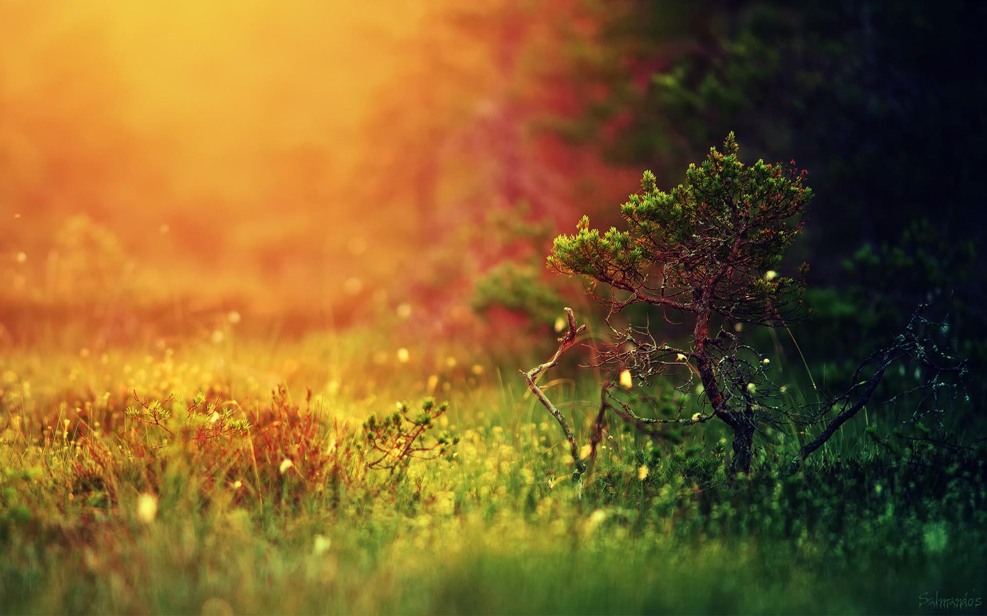 Девочка лучи тропинка трава  № 3725999 бесплатно
