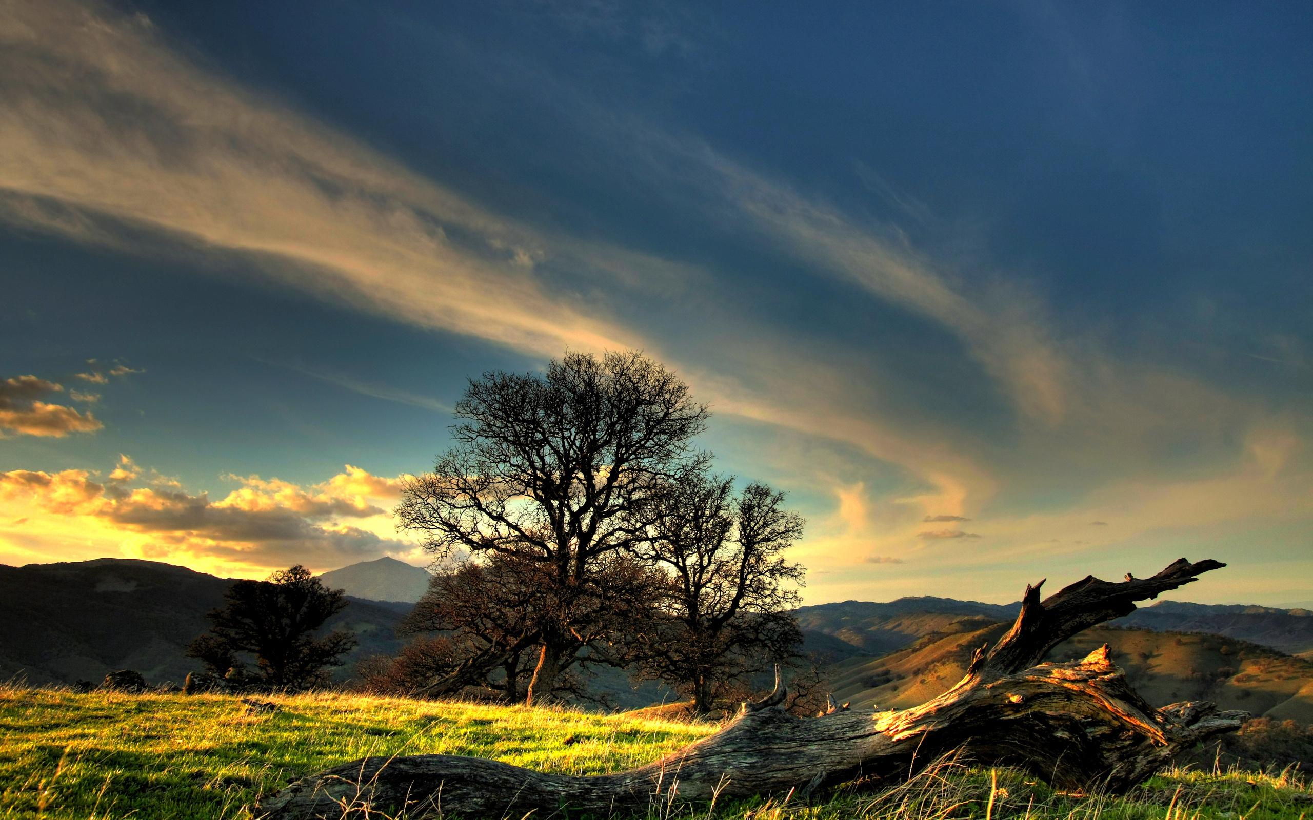 закат,деревья,зелень  № 1076638 без смс