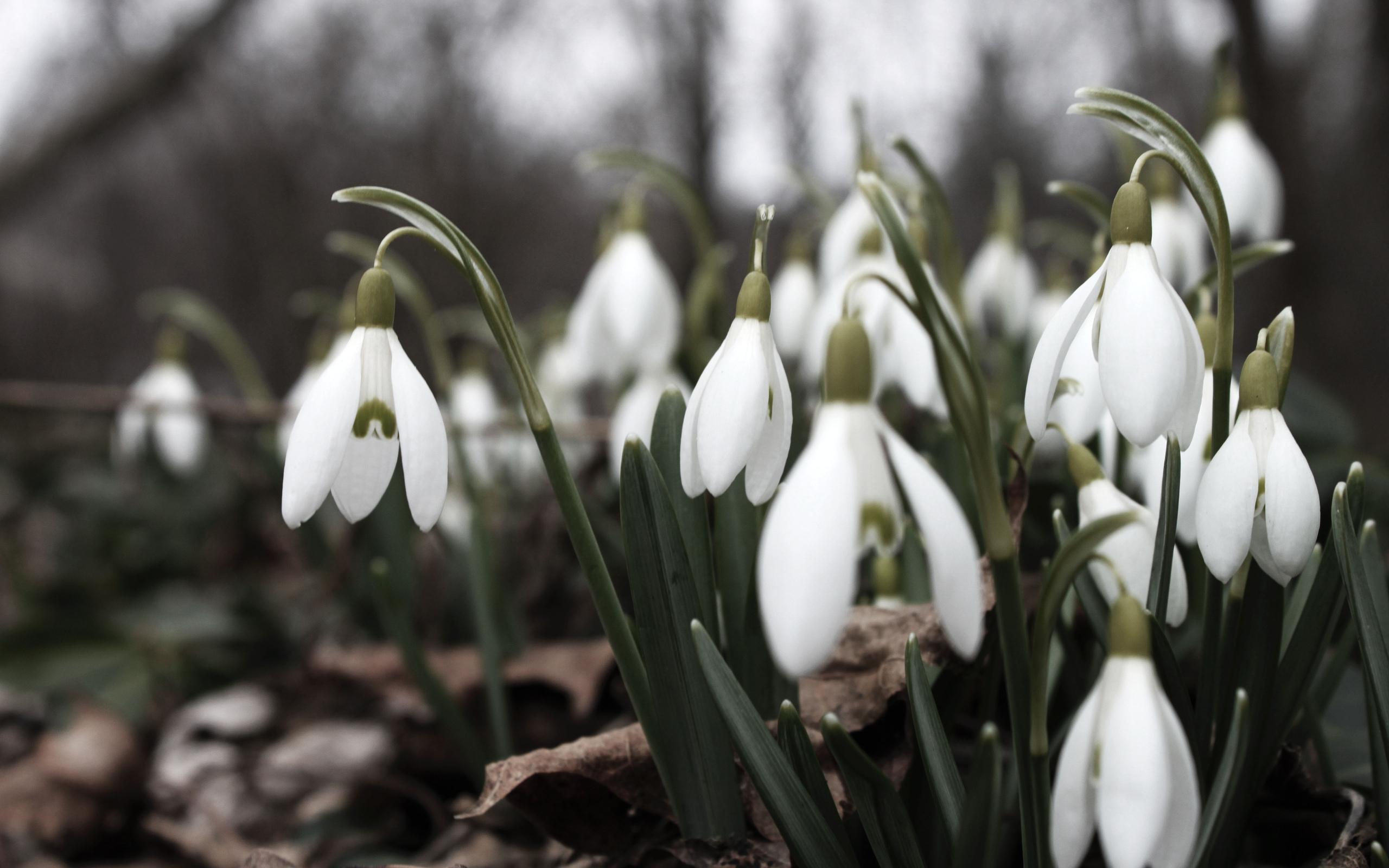 роль баты картинки на рабочий стол весна подснежники аспекты