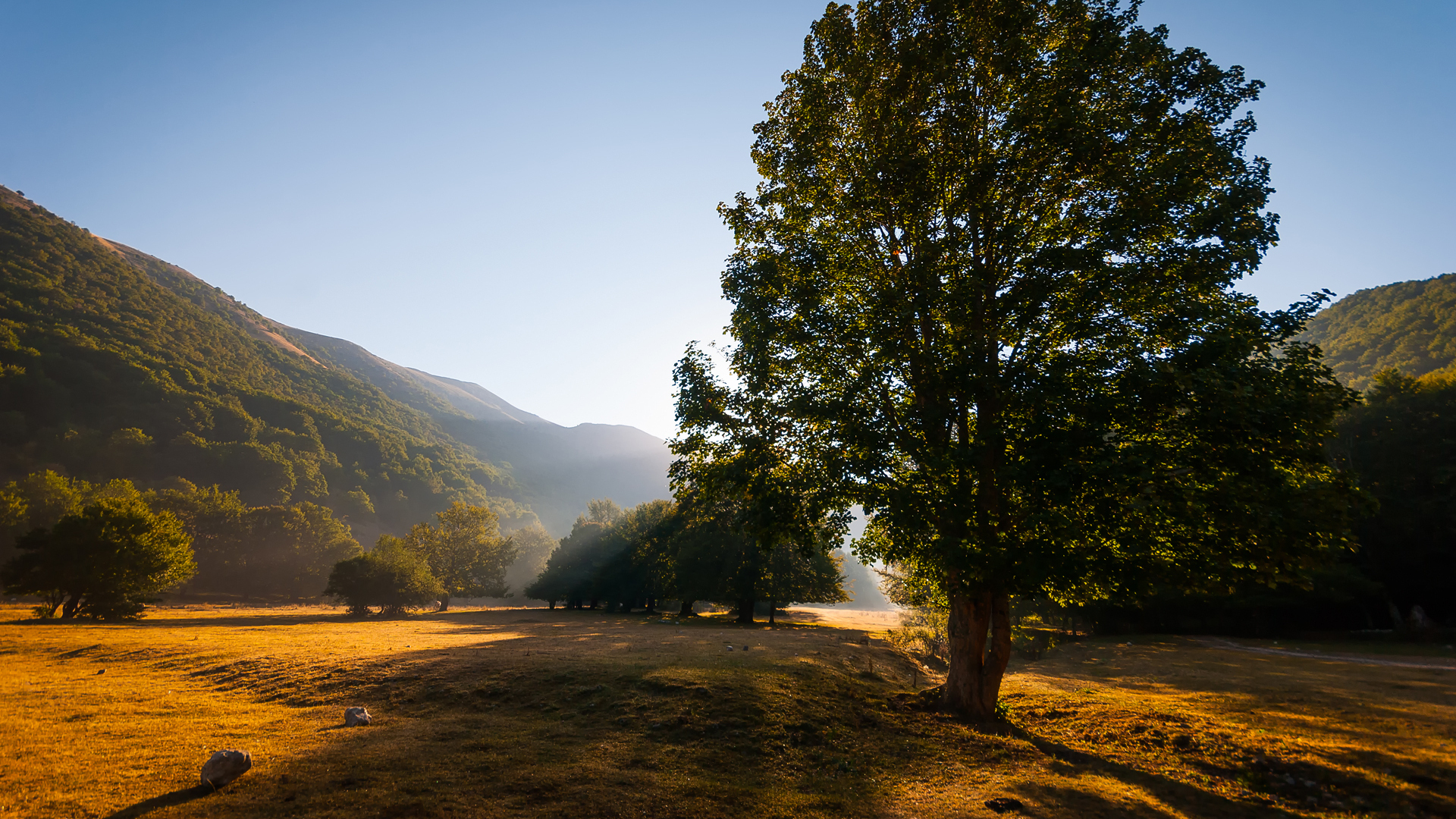 природа деревья горы  № 2787572  скачать