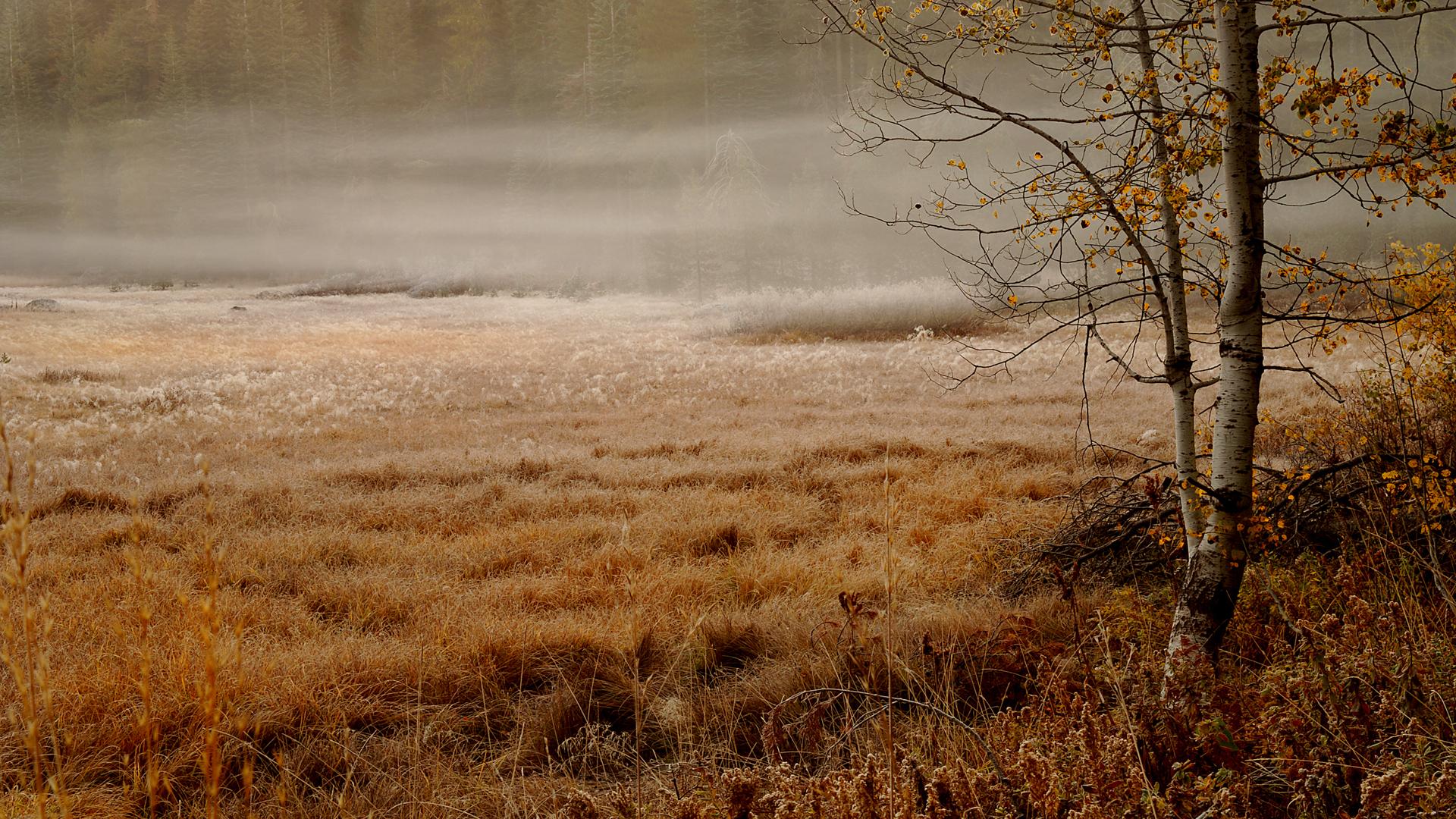 туман поле лес на телефон