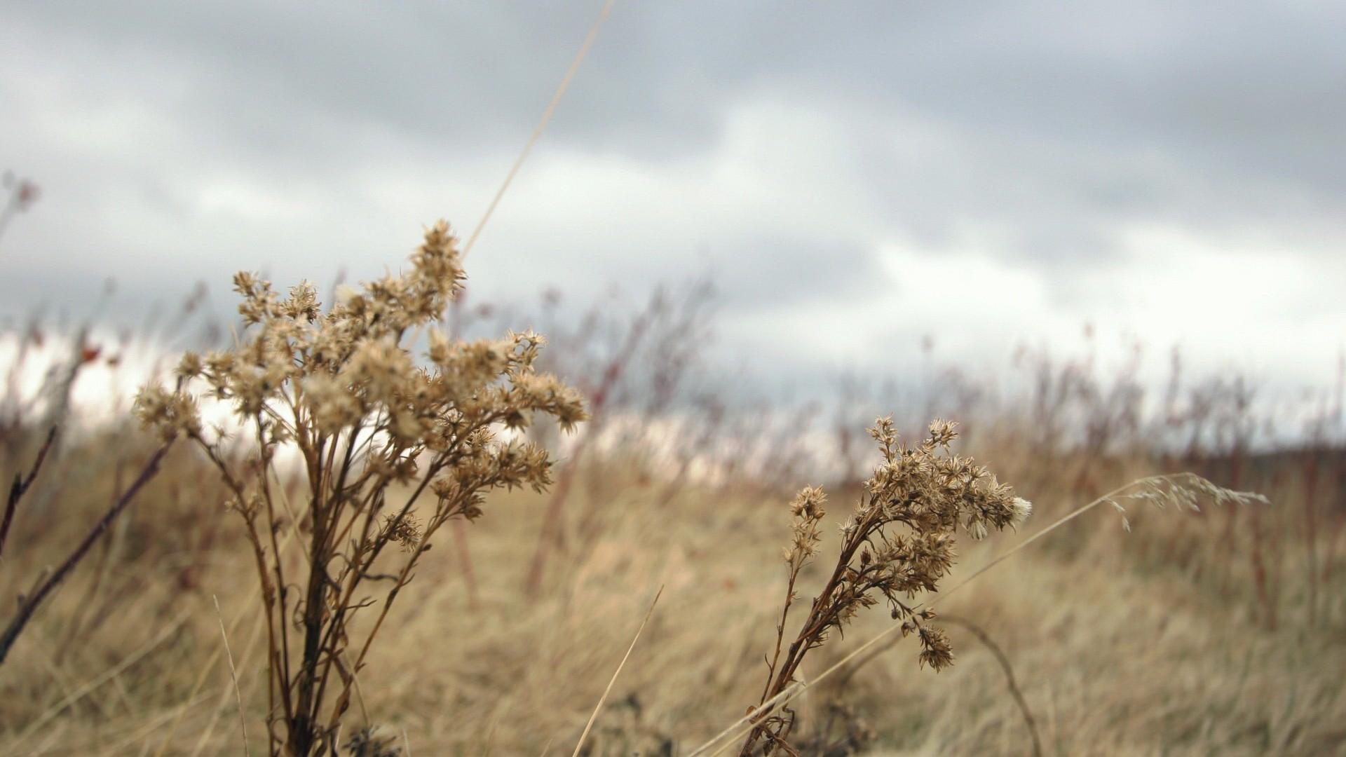 болотная степь загрузить