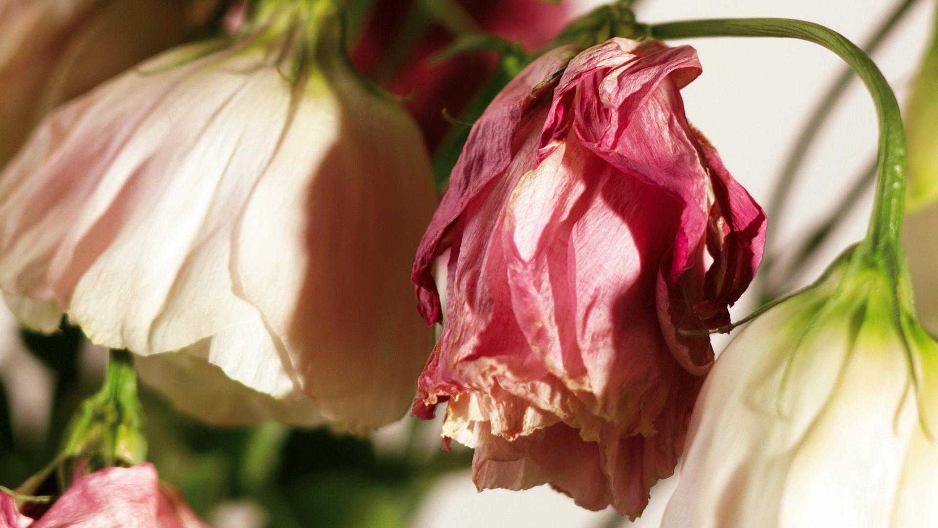 одной отличительной цветы завяли картинки современном