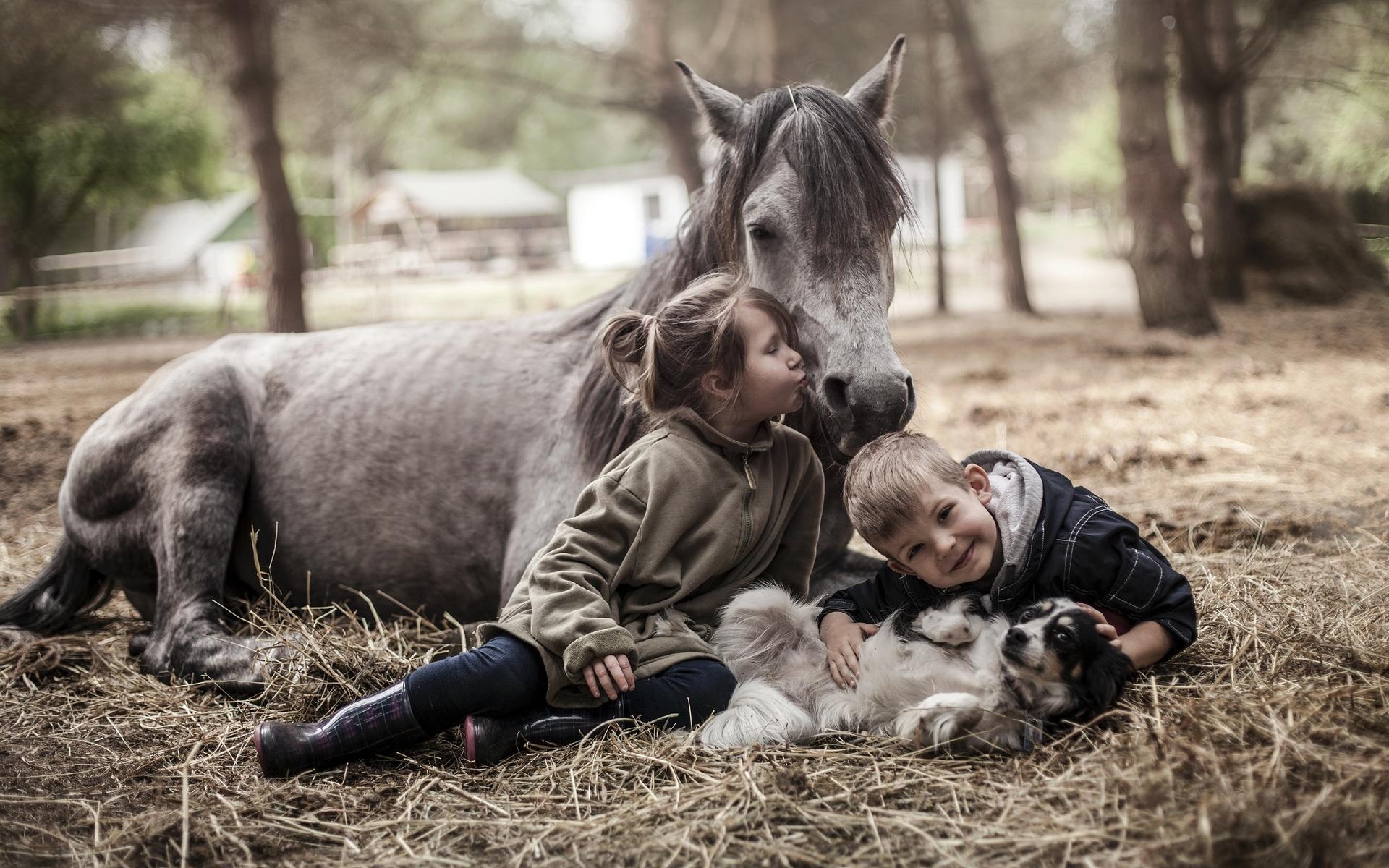 обучения картинки с домашними животными лошадьми таким обрамлением оно