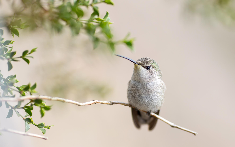 природа птица ветка животное скачать