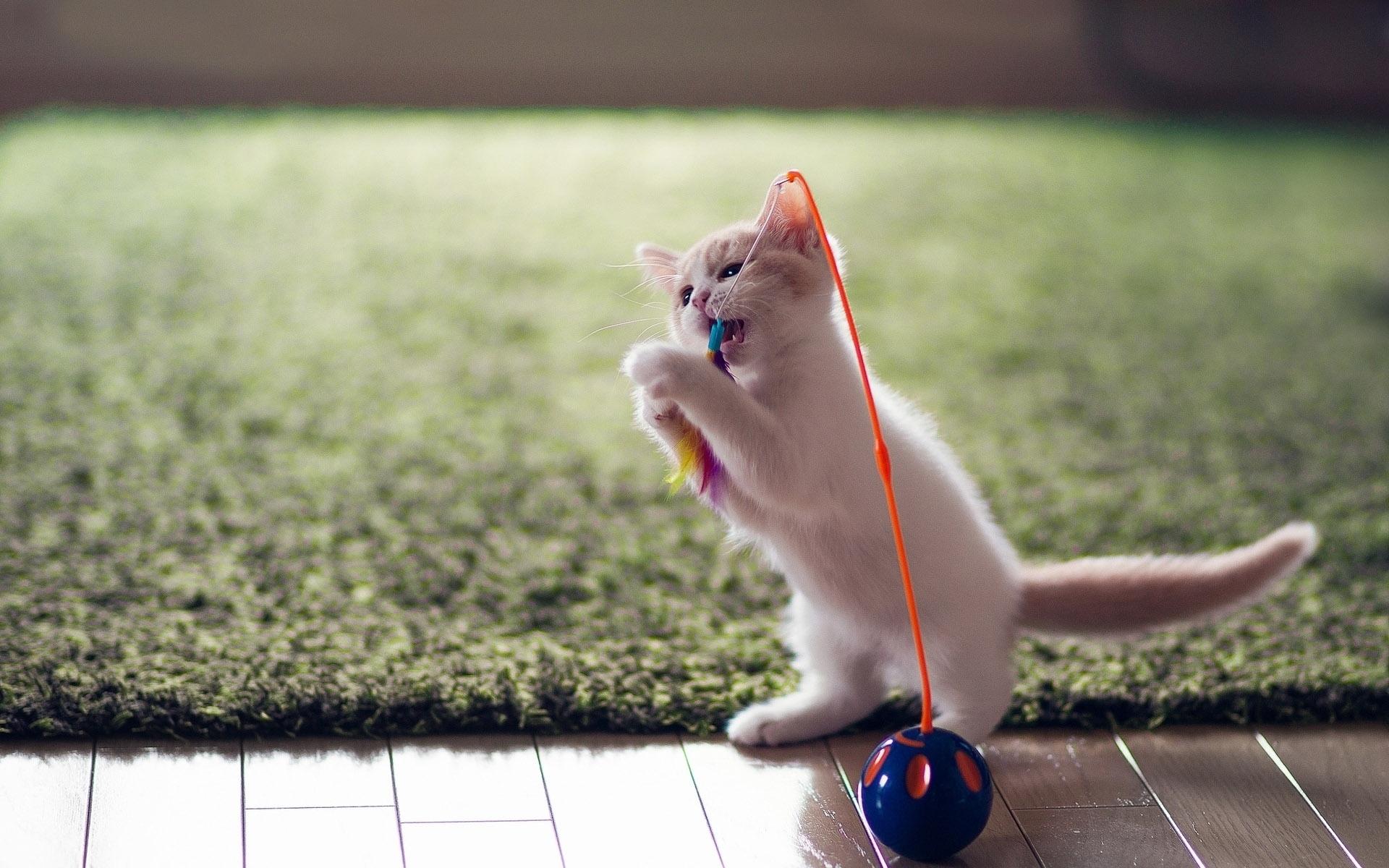 Котенок животное играется загрузить