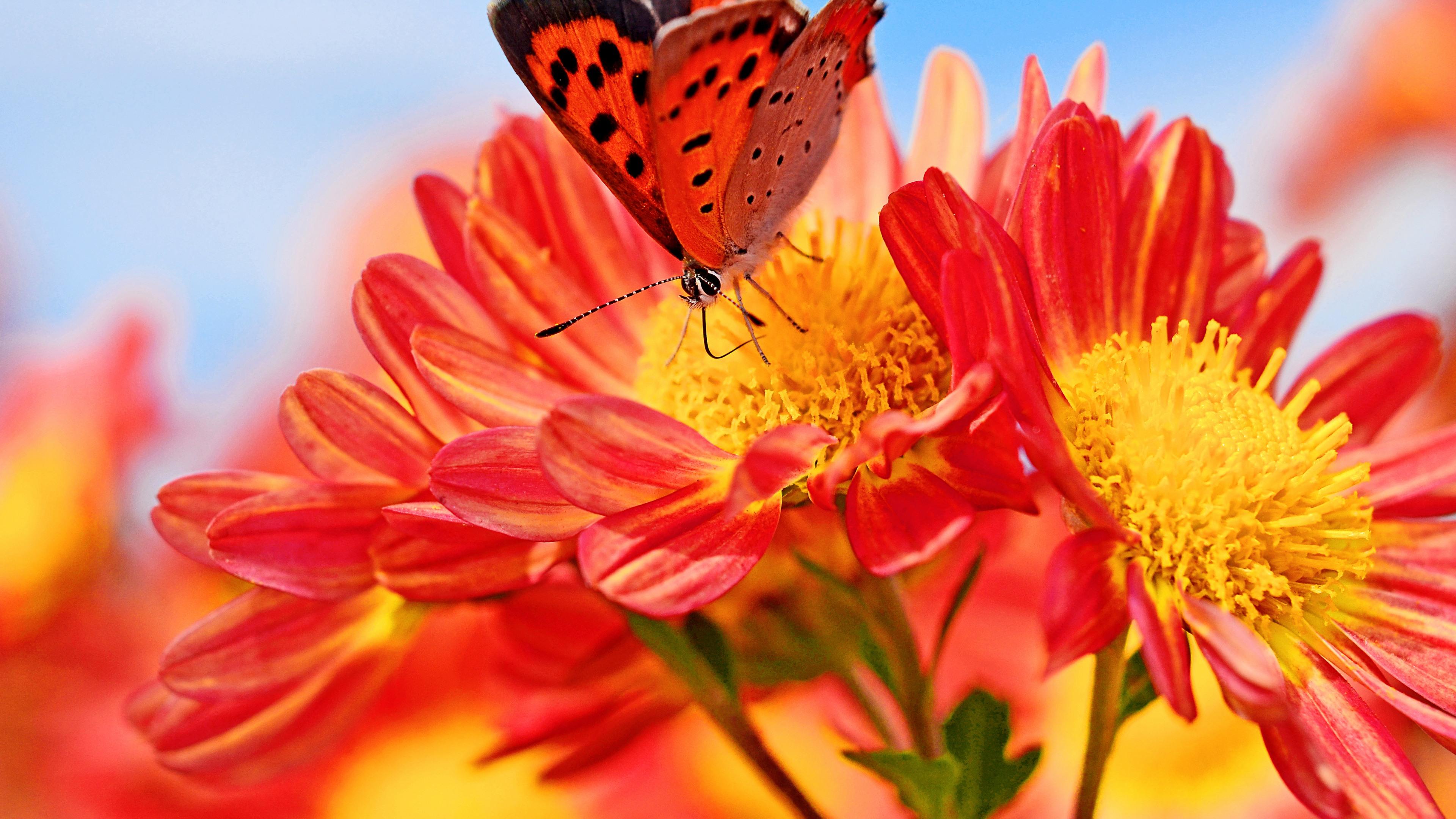 Привет хорошего, картинка с изображением цветов и бабочек