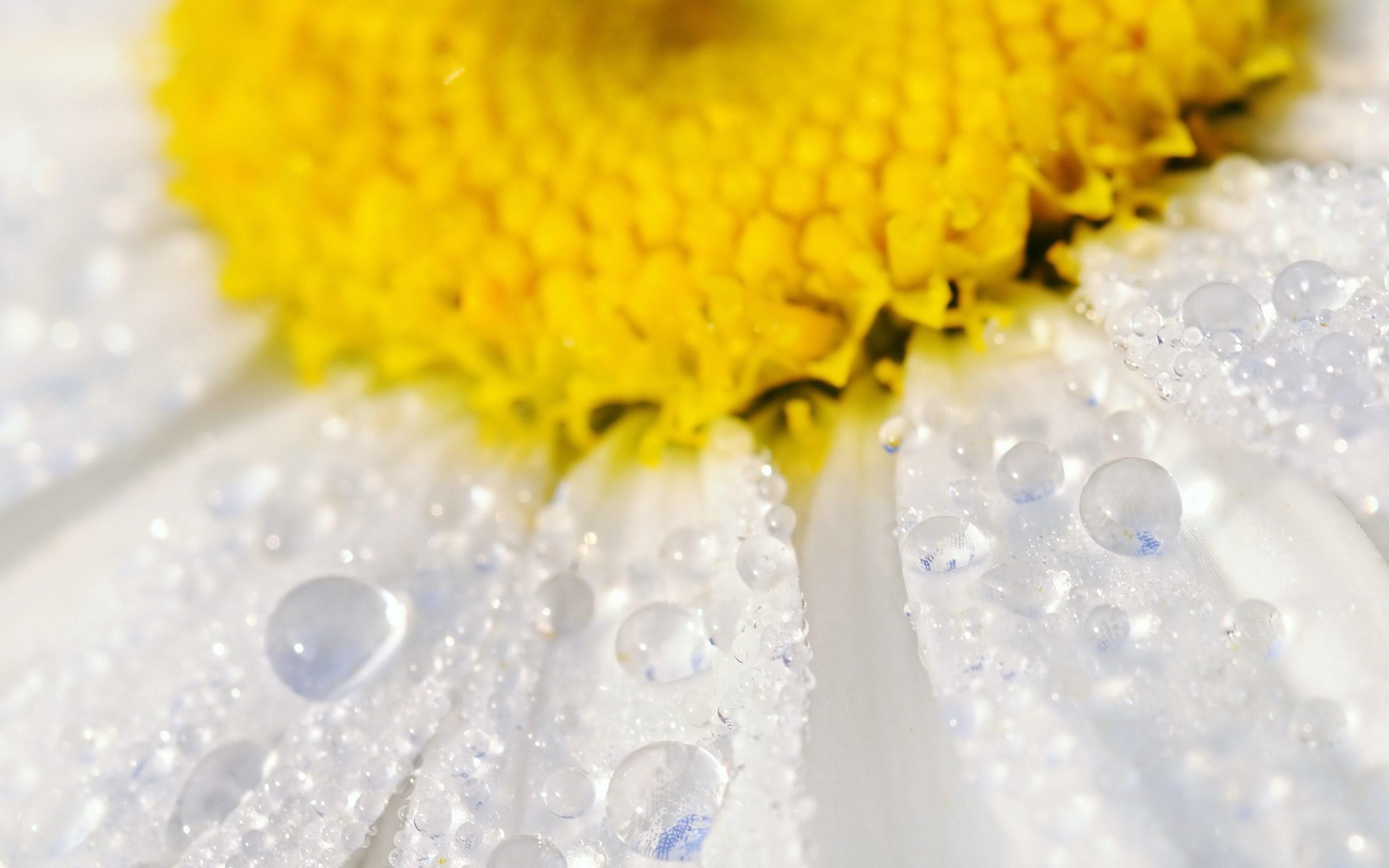 Капля желтый цвет лепесток скачать