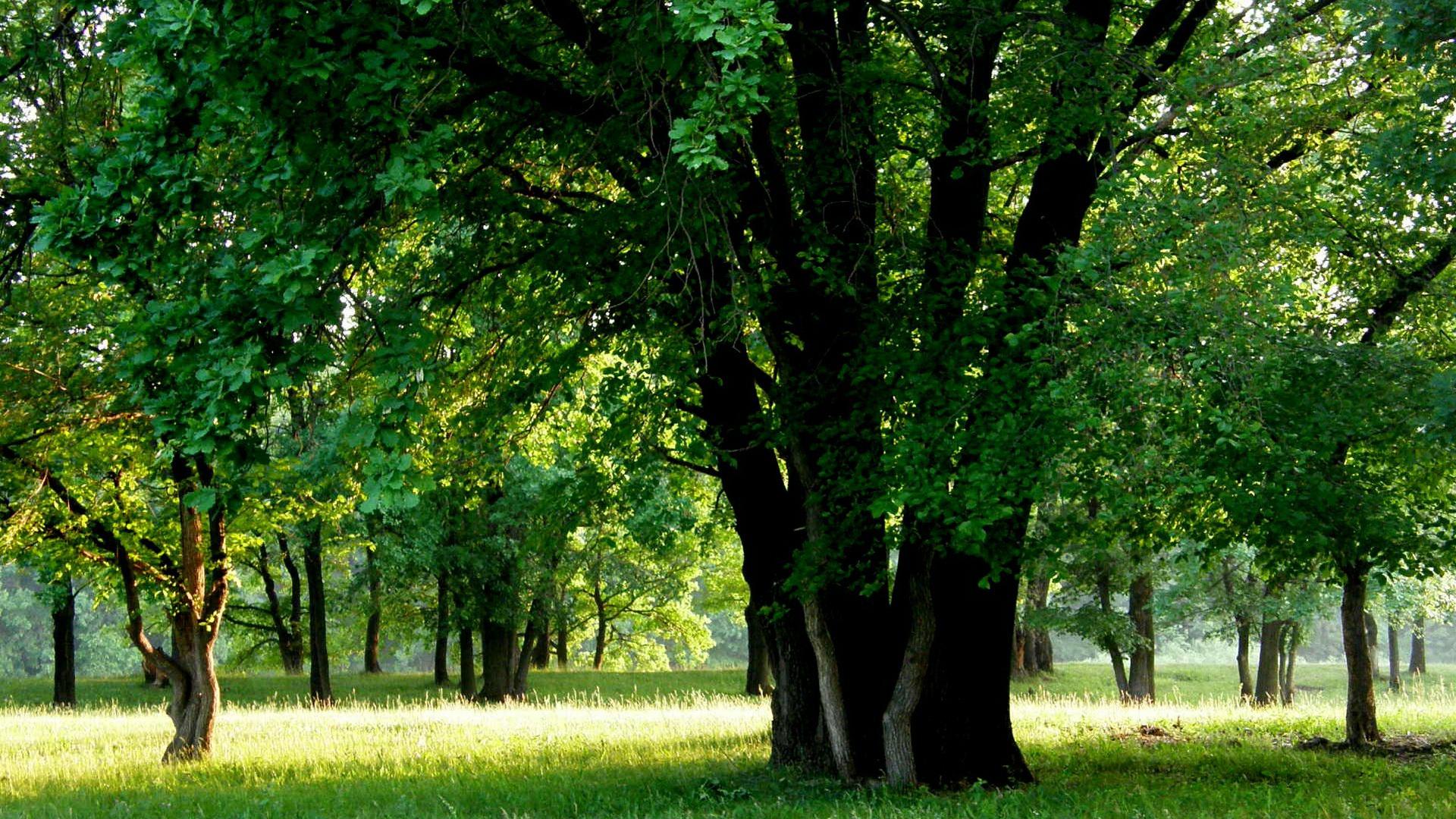 Деревья фон картинка
