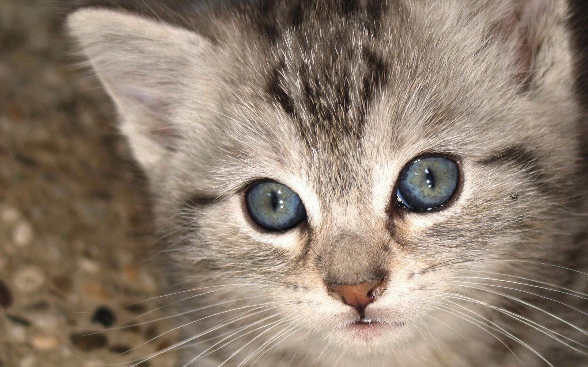 Красивые картинки с котами, стол анимация