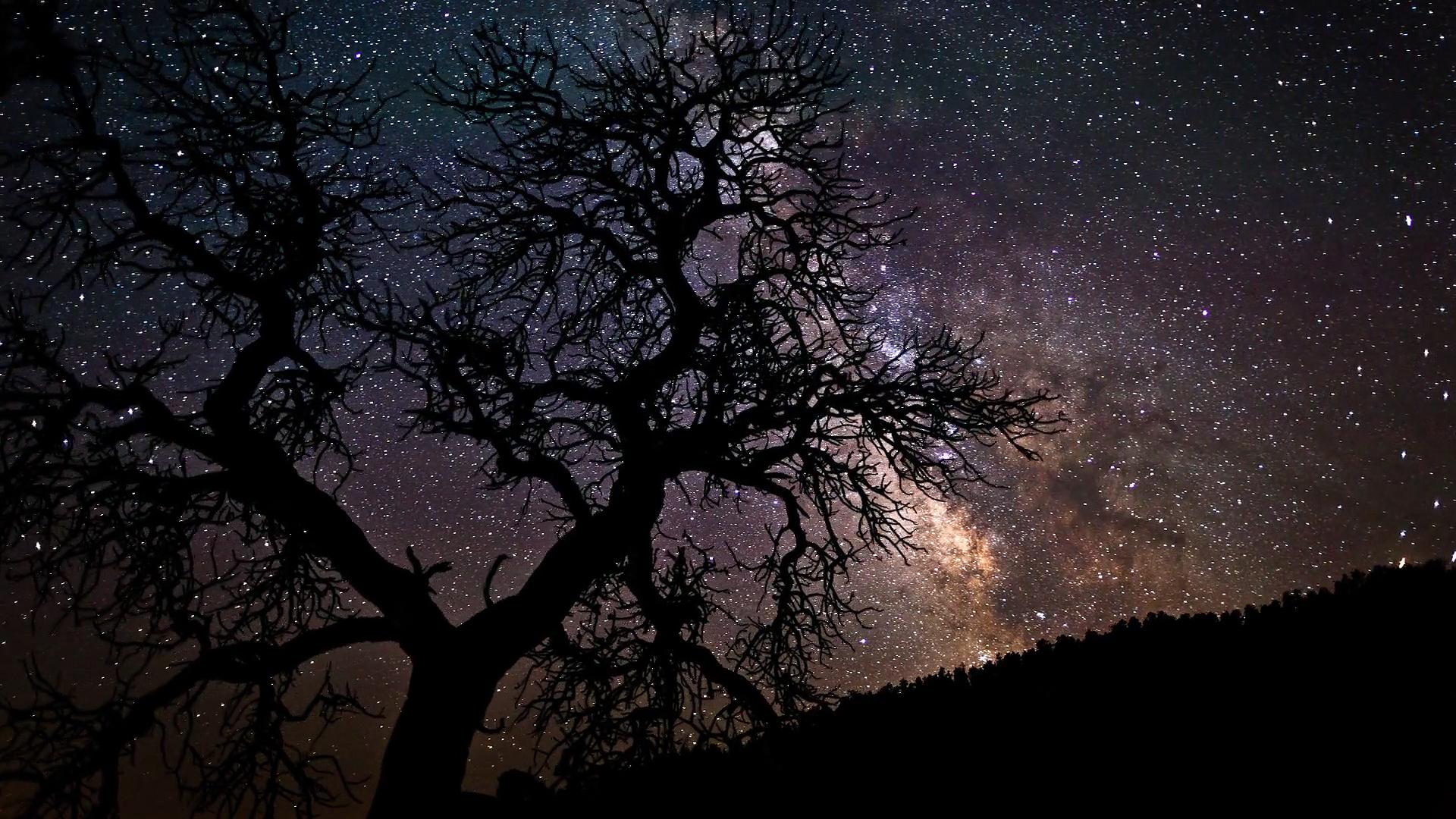 звезды лес кроны бесплатно