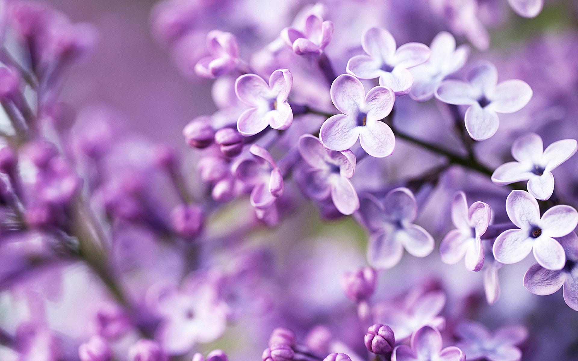Картинки с фиолетовыми цветами в высоком качестве, замечательной