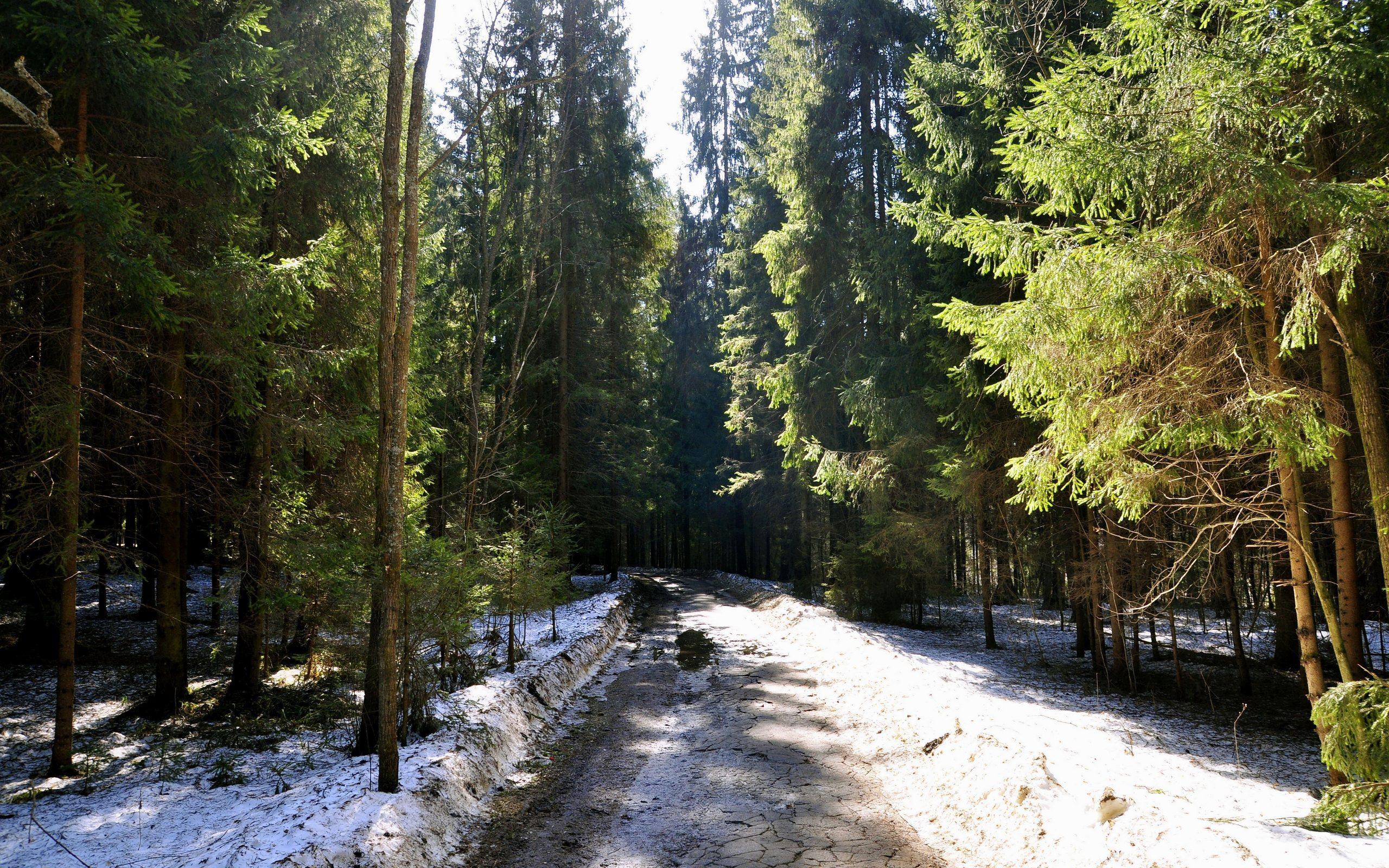 весной в лесу  № 113905 без смс