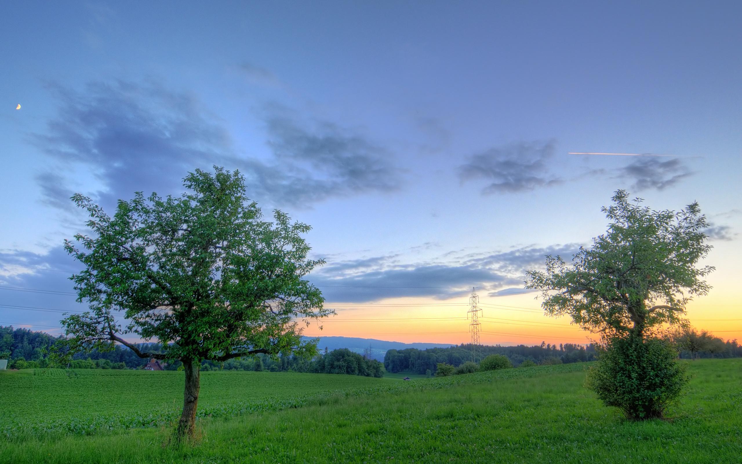 природа горизонт деревья вечер скачать