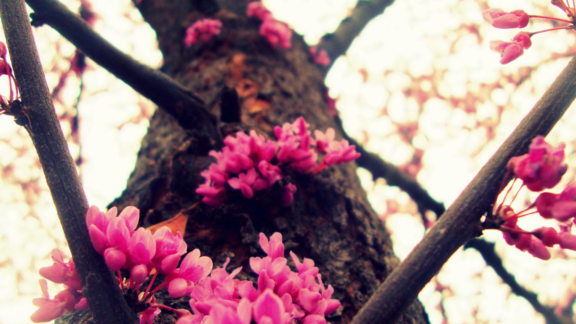 Цветы в стволе дерева подборки