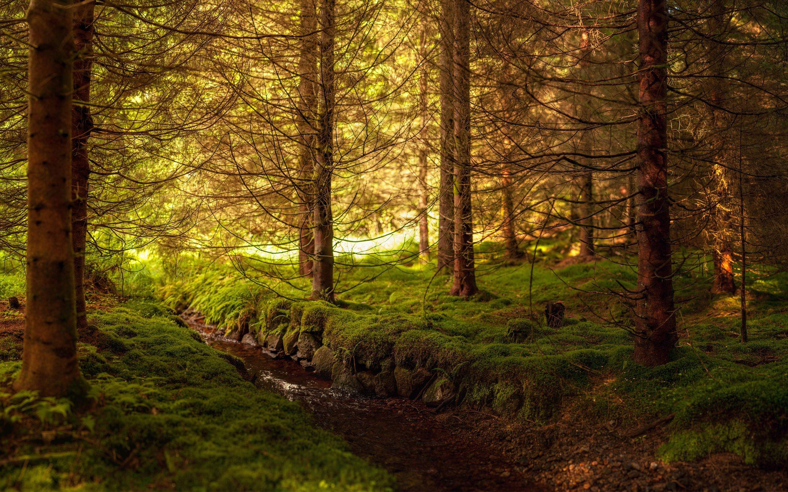 лесной ручей  № 1489956 бесплатно