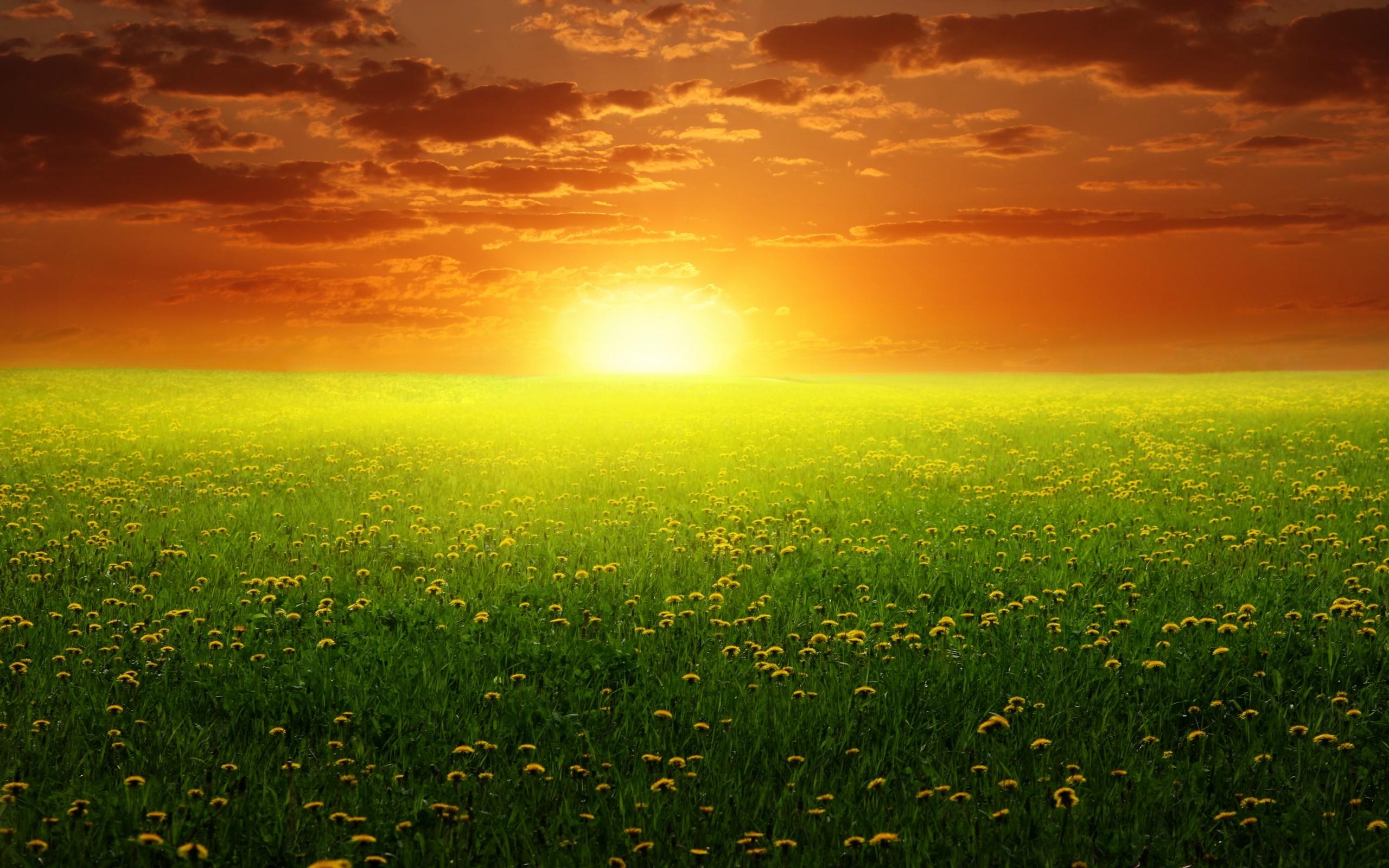 поле желтое закат  № 680832 бесплатно