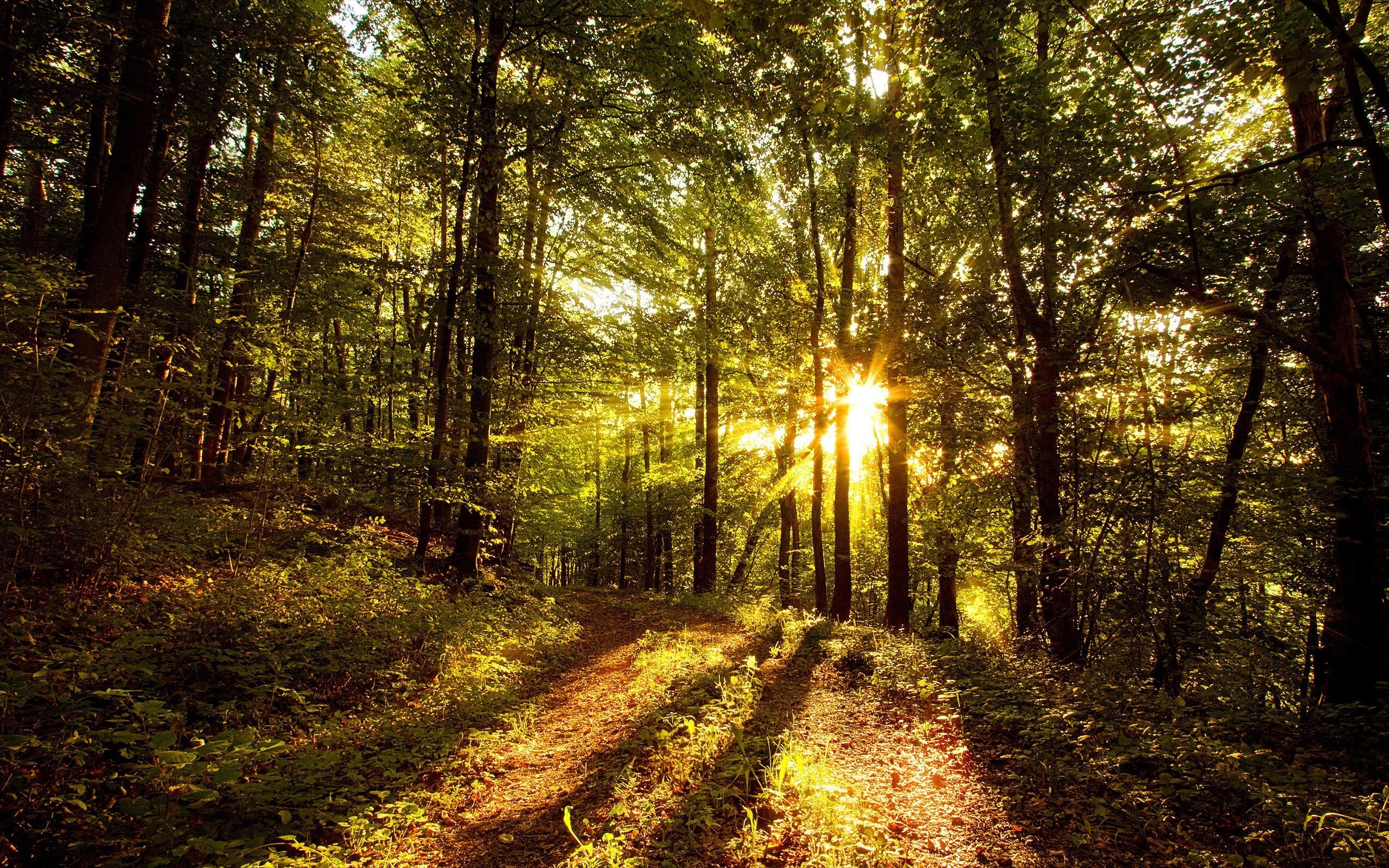 лес лучи солнце дорога скачать