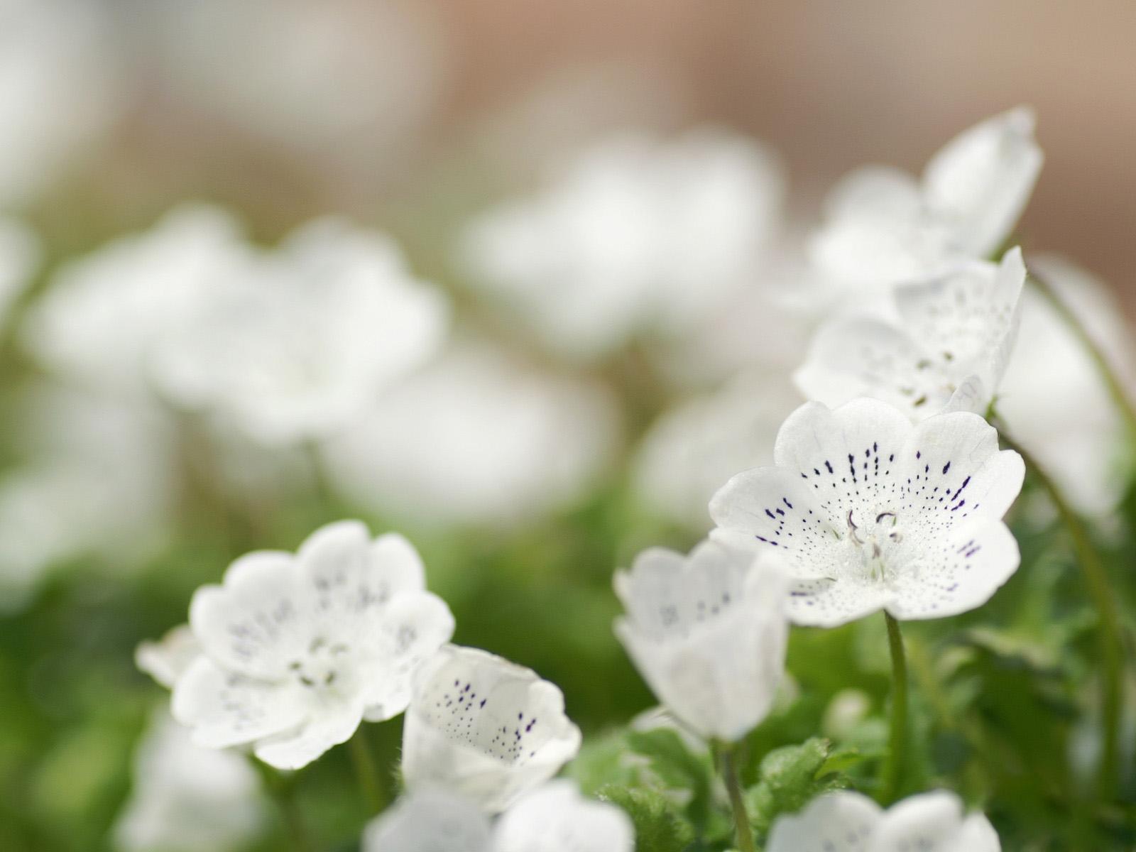 Цветы белые картинки, заек