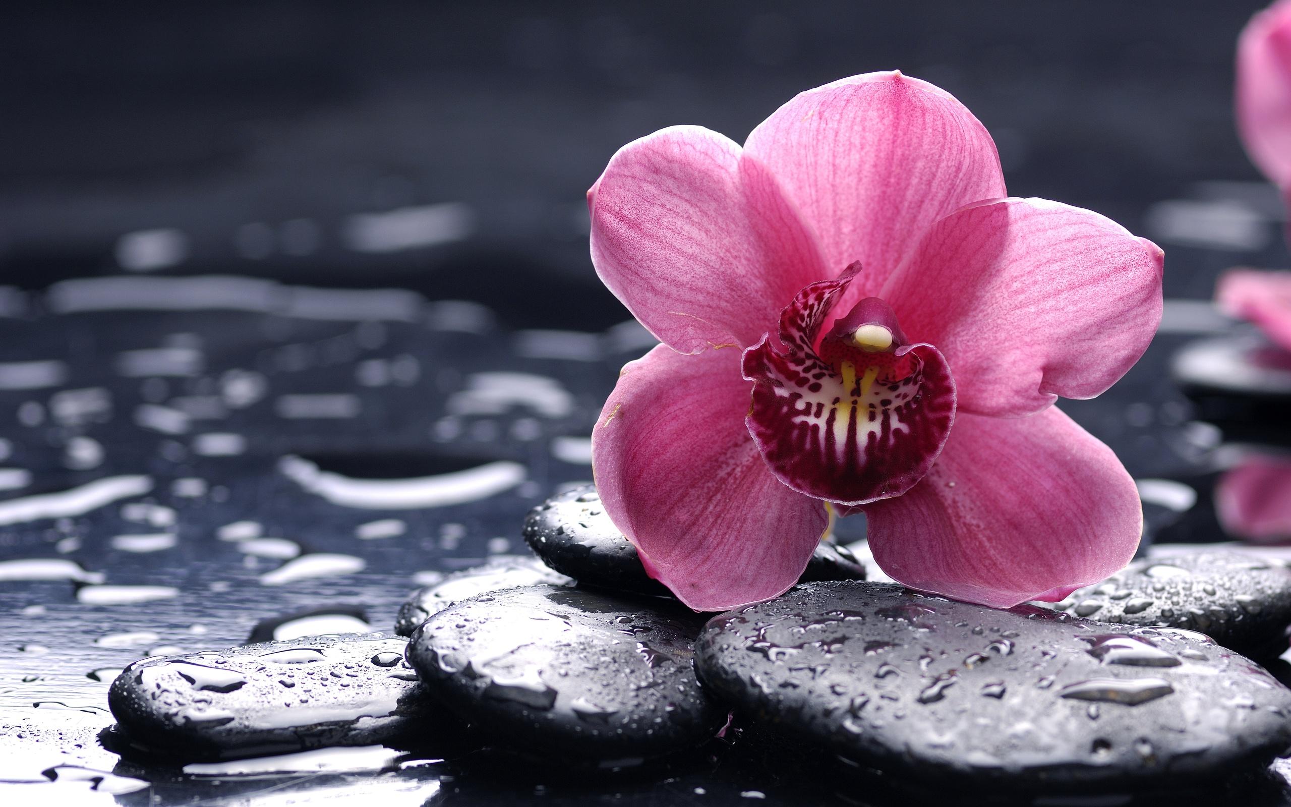 Цветок, черные камни, стебли скачать