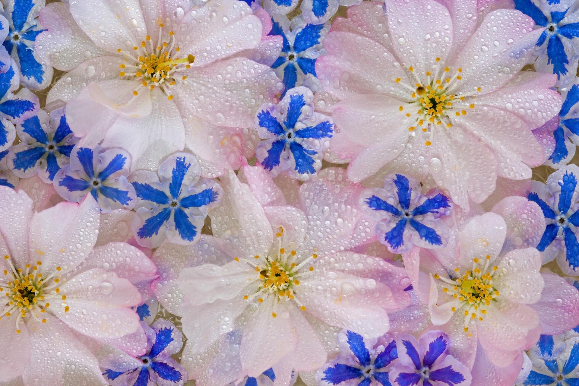 Открытки для, движущиеся картинки на телефон цветы
