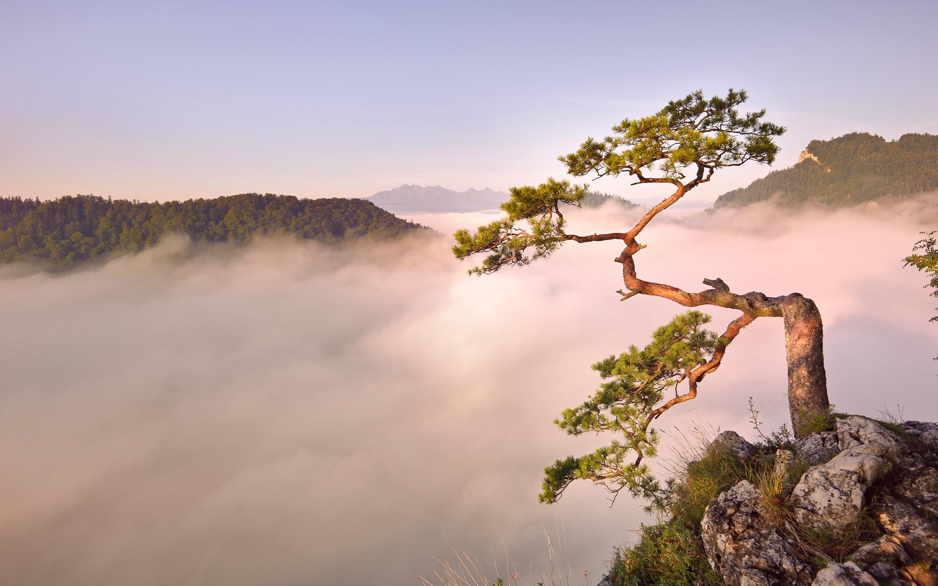 горы рассвет деревья вода  № 3850858 бесплатно