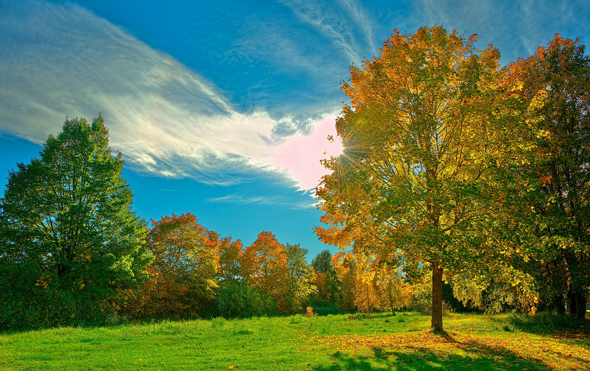 природа облака деревья трава солнце река небо без смс