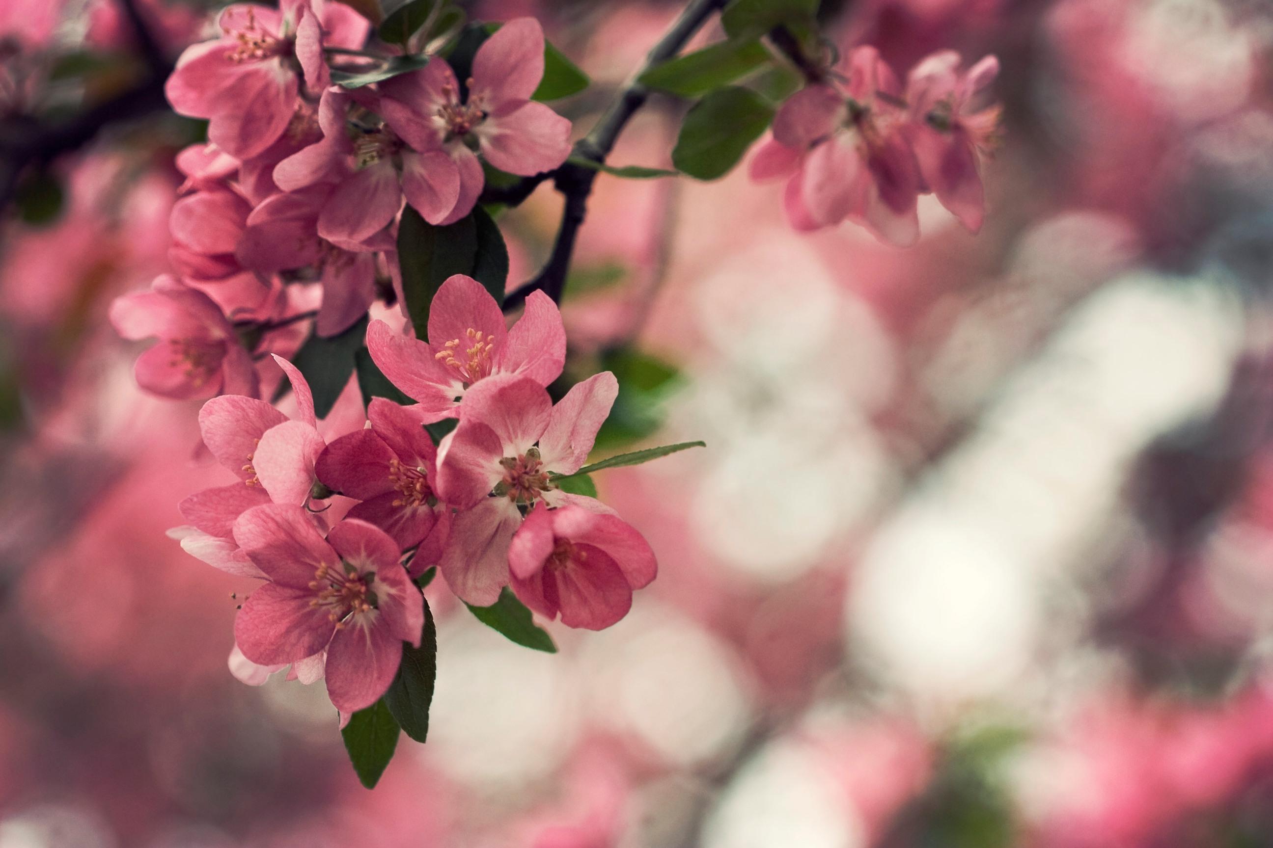Красивые картинки с природой и цветами на телефон, сталкер