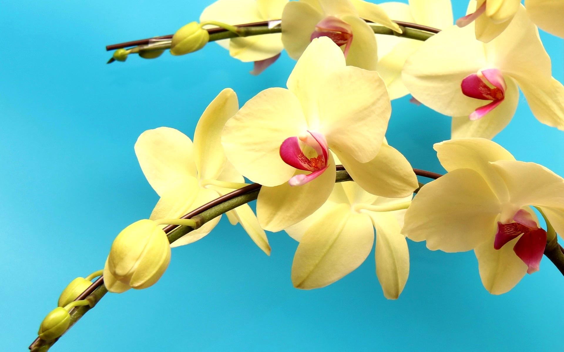 Картинки с орхидеями на рабочий стол, спасибо большое очень