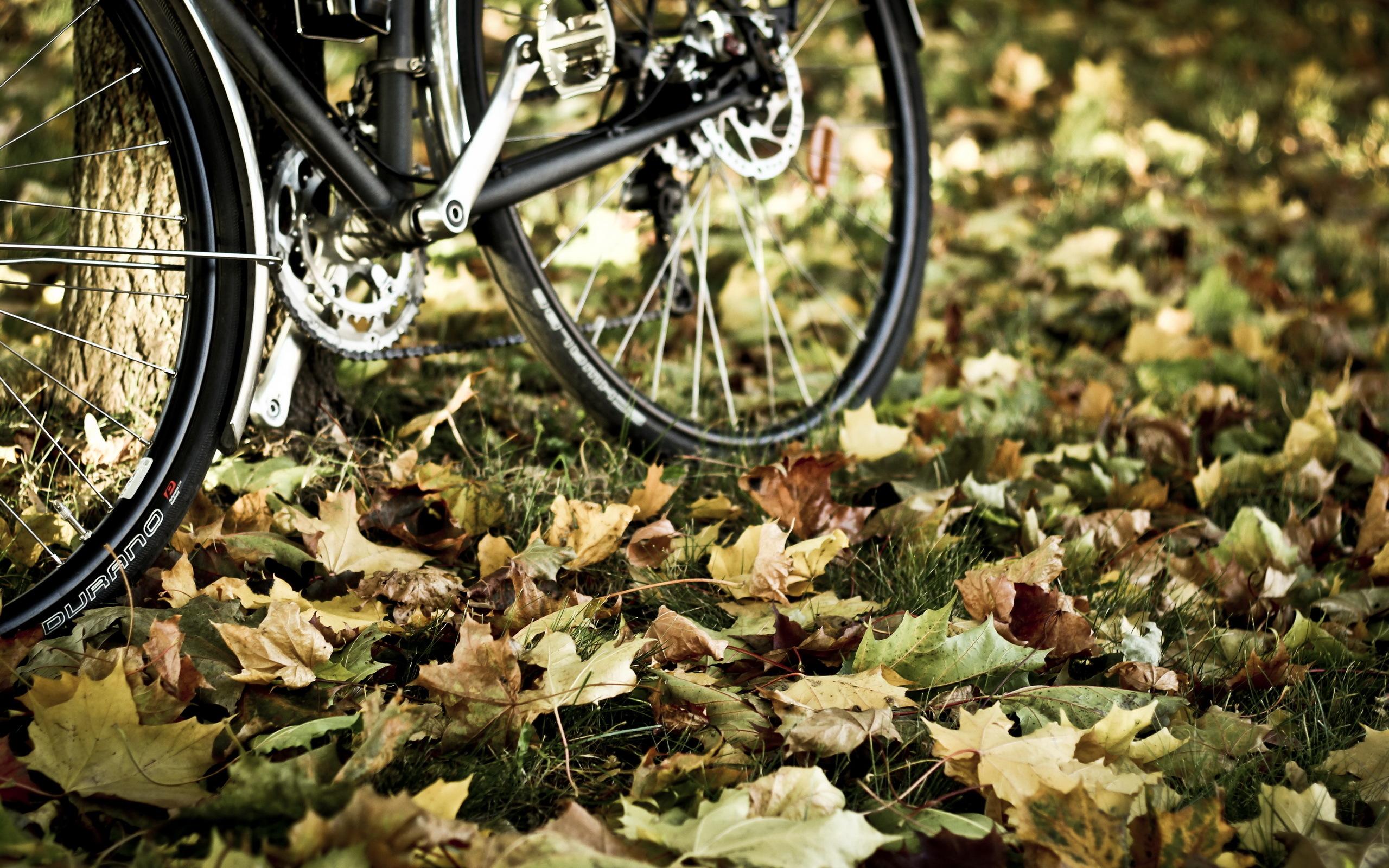 Брошенный велосипед бесплатно