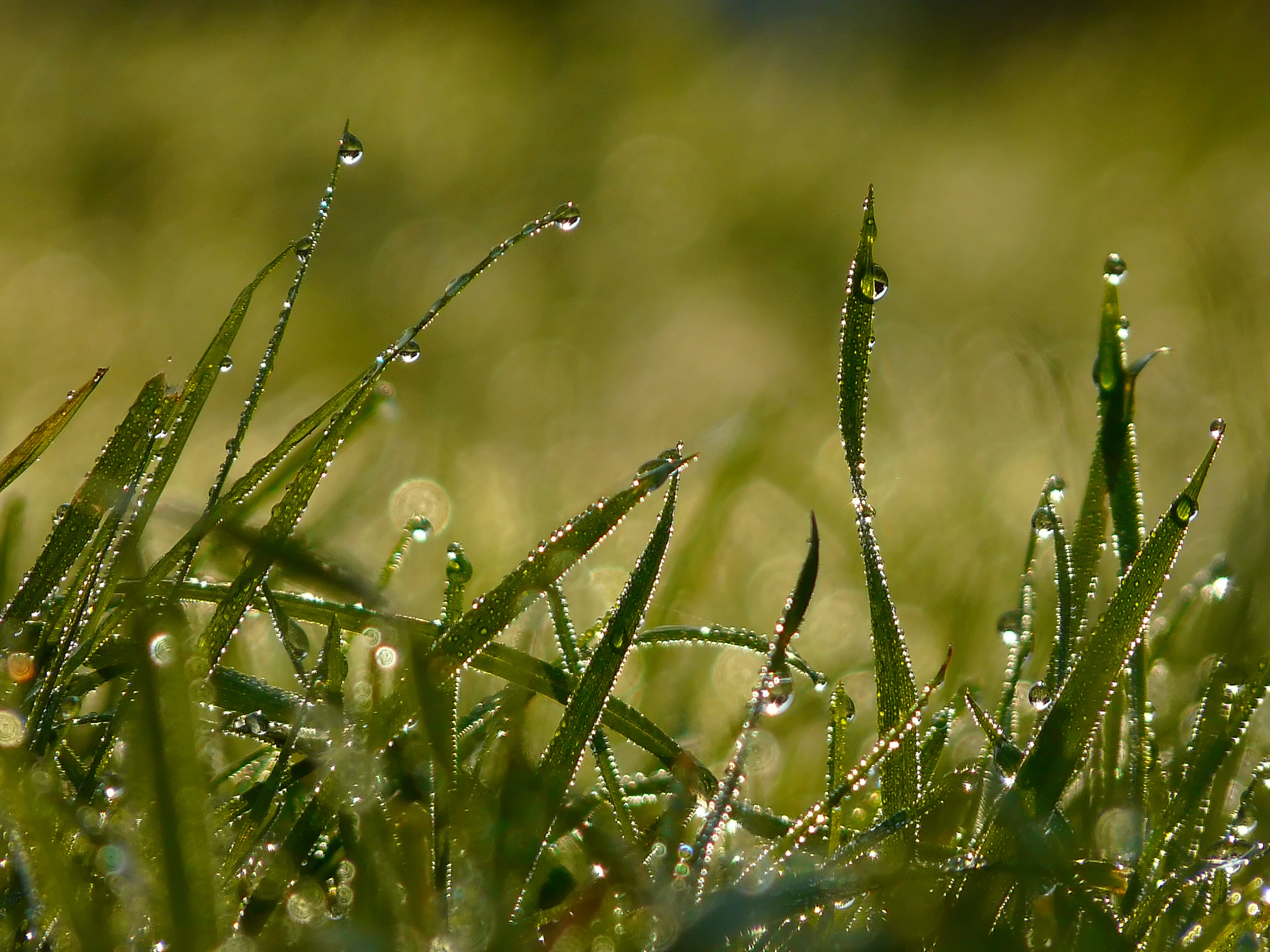 травинки капли скачать